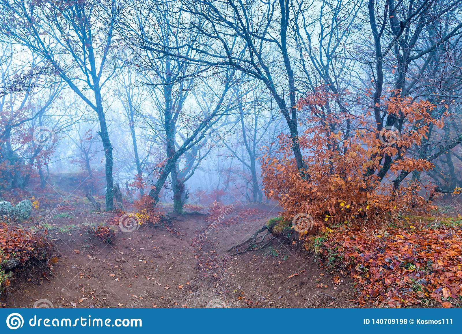 Mystical landscape of mountains, trees on a mountain in dense fog