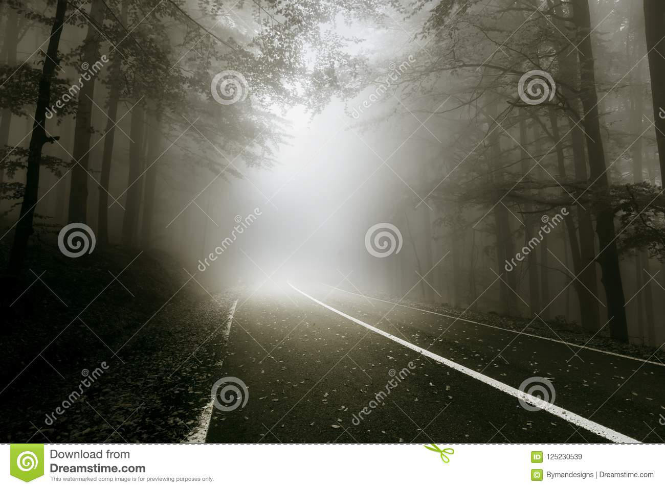 Mystical road through the forest