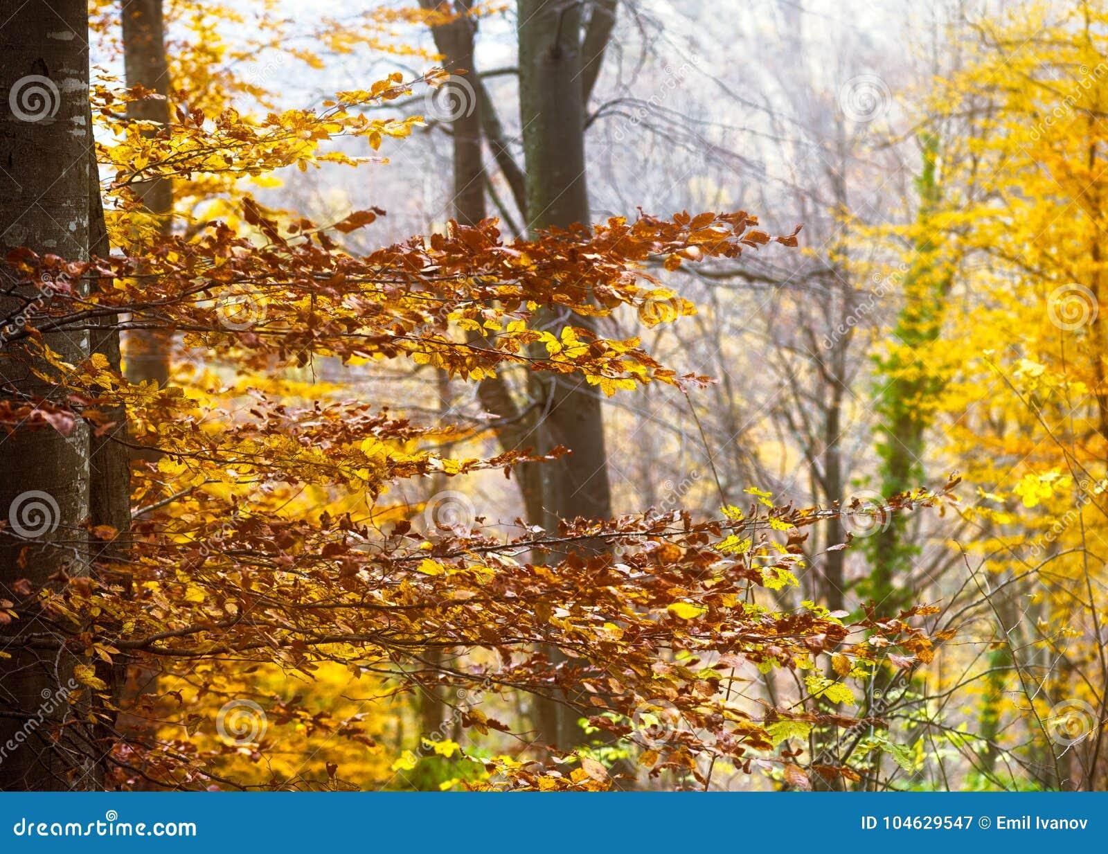 Download Mystiek bos in de herfst stock afbeelding. Afbeelding bestaande uit outdoors - 104629547
