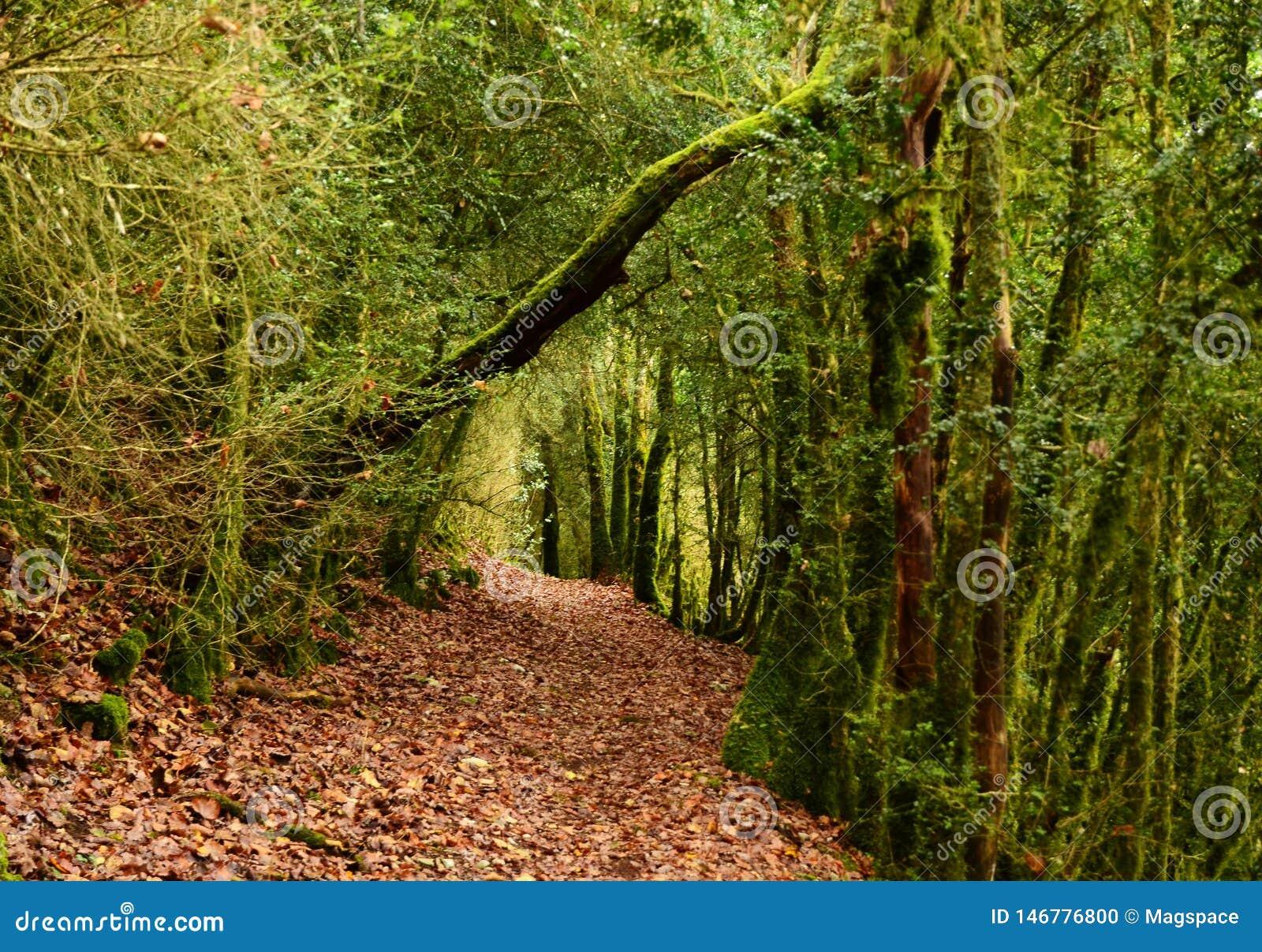Mystiek mooi bemost boslandschap, Frankrijk