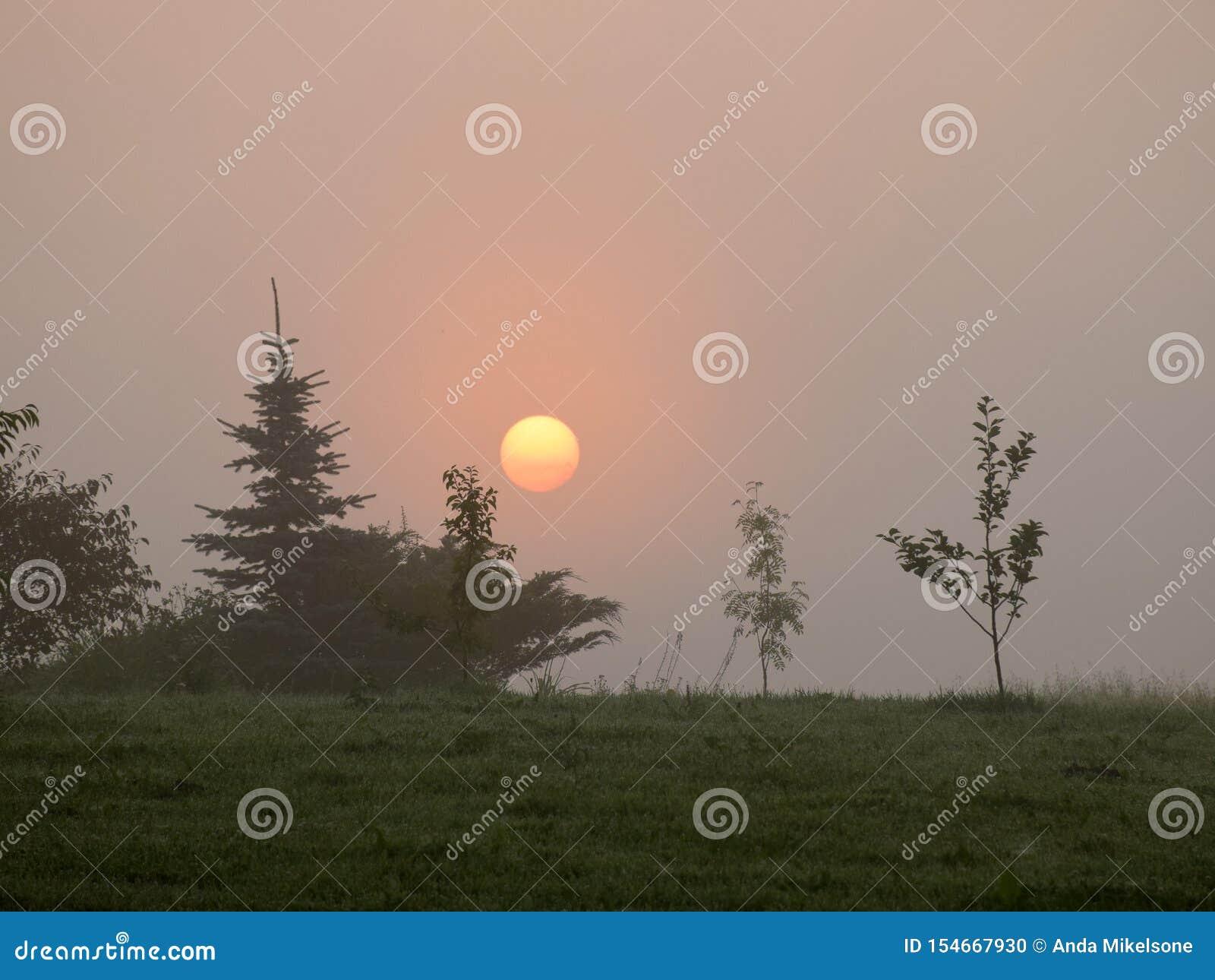 Mystische Sonne morgens hell