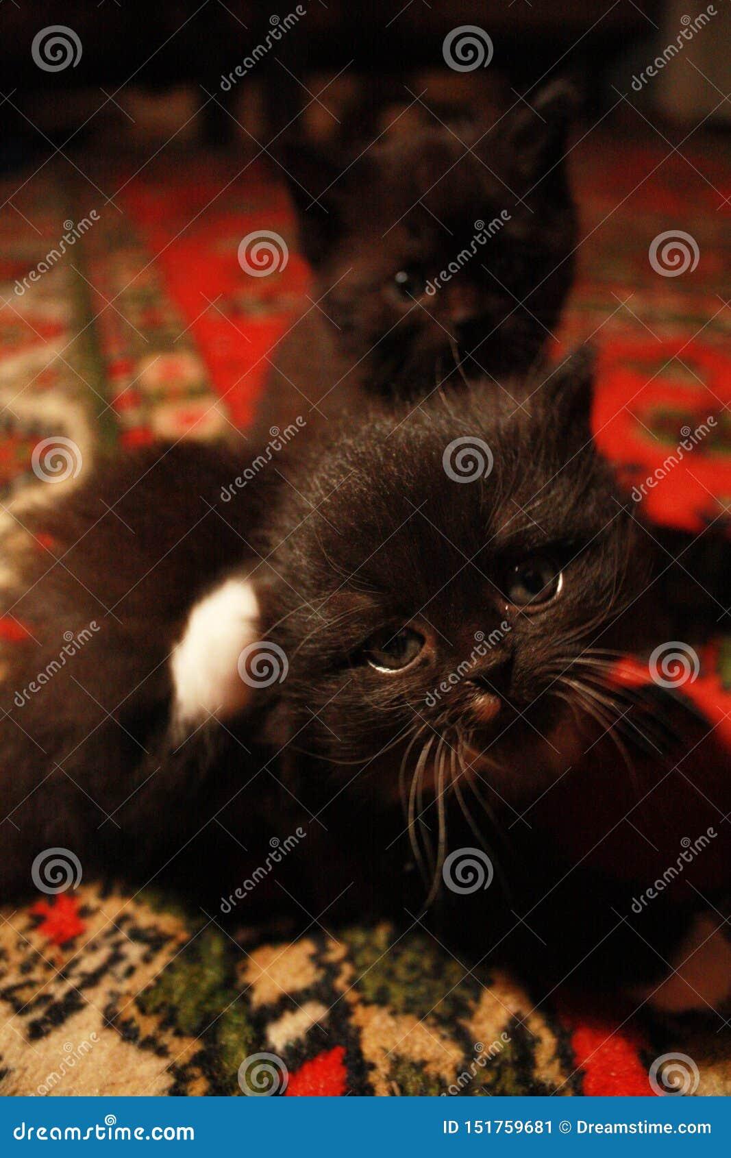 Mystisk blick av en kattunge