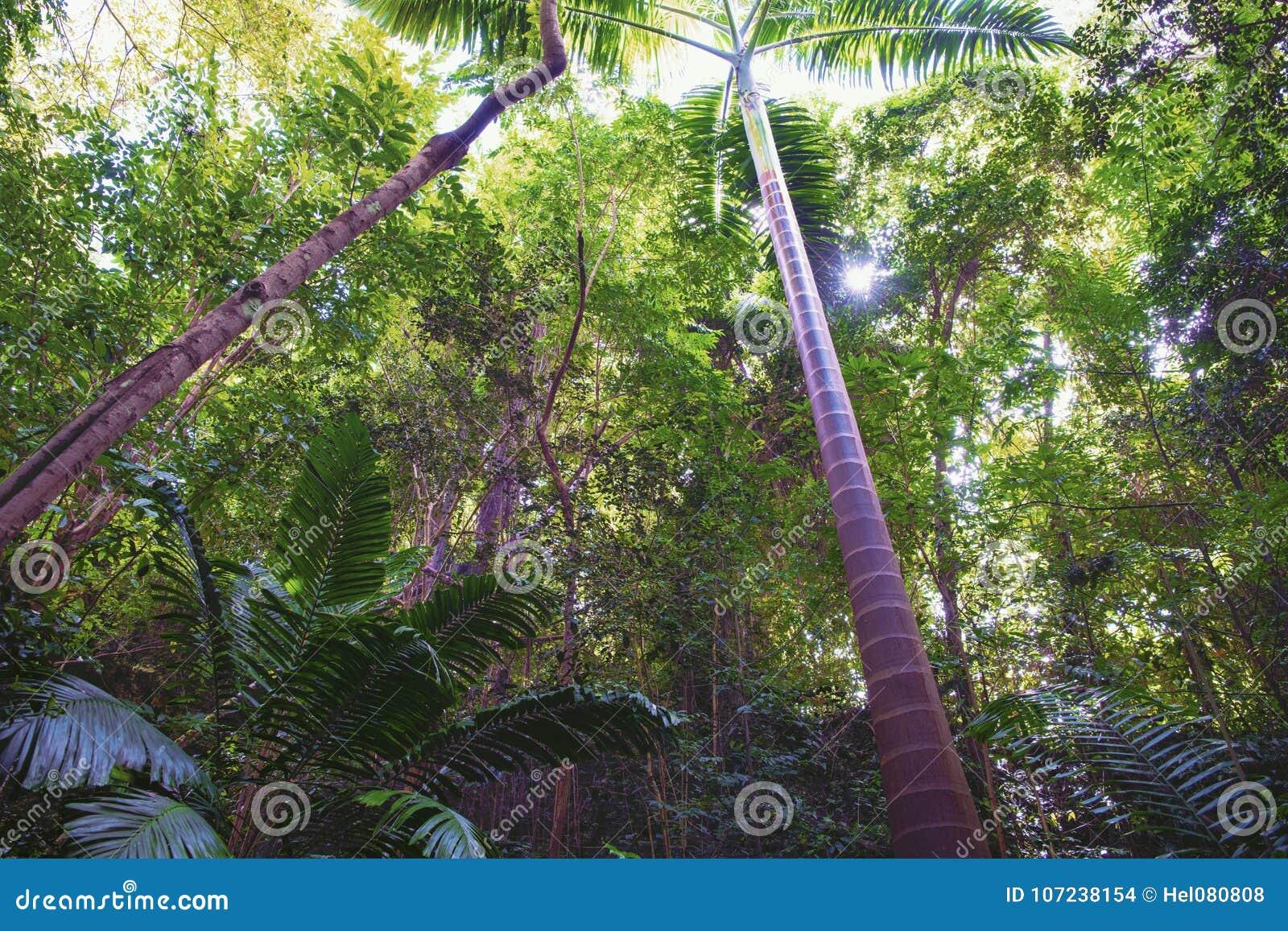 Mystisk djungelskog i Tropes