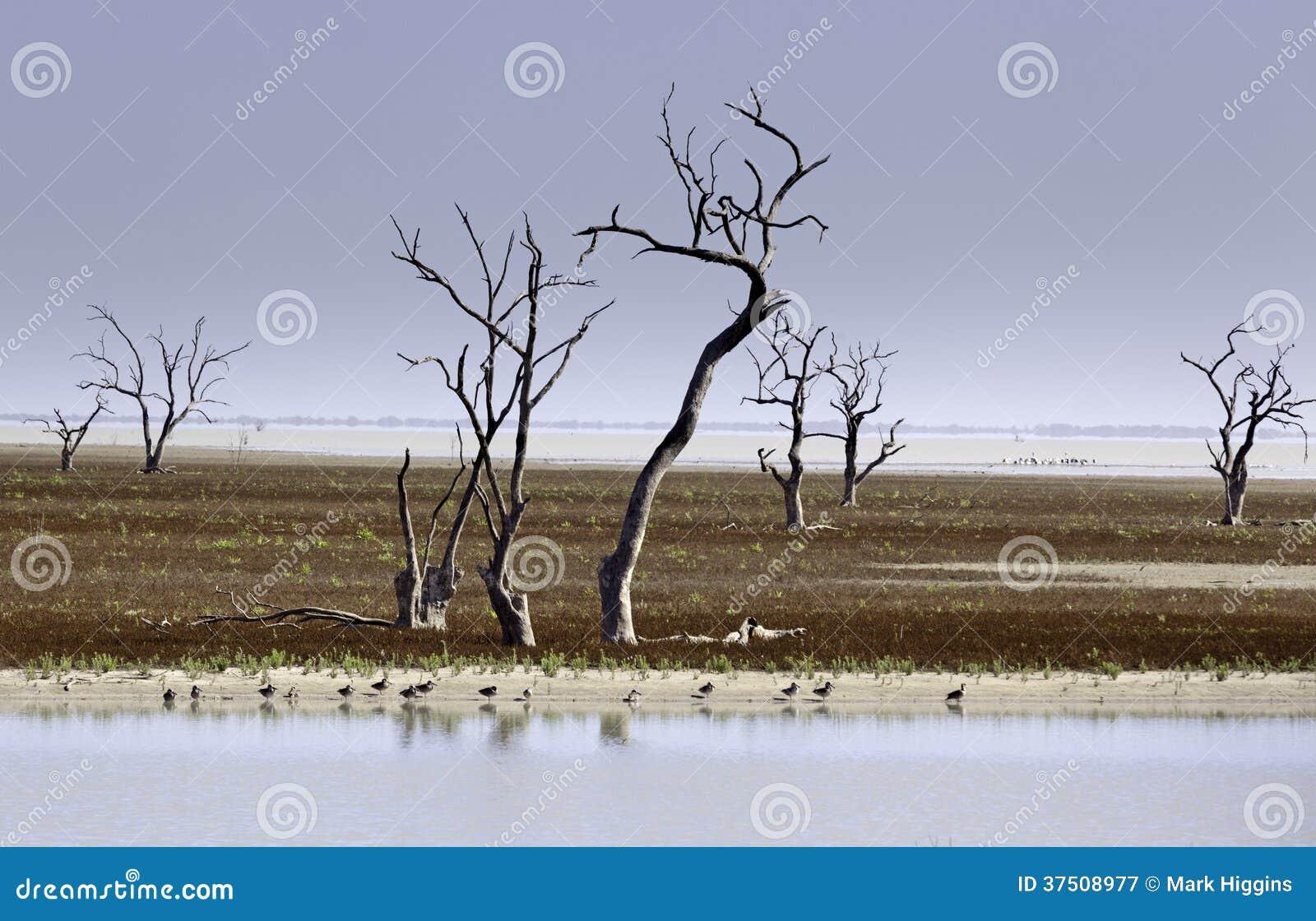 Mystrious döda trädMenindee sjöar Australien