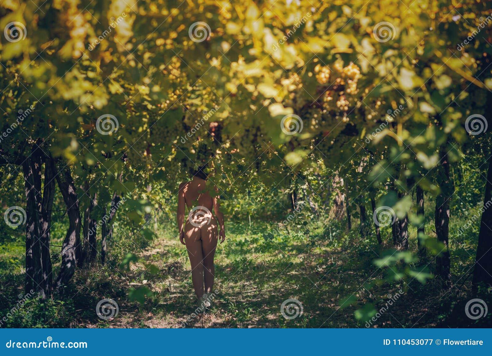 Näck härlig flicka i en vingård på en varm solig afton
