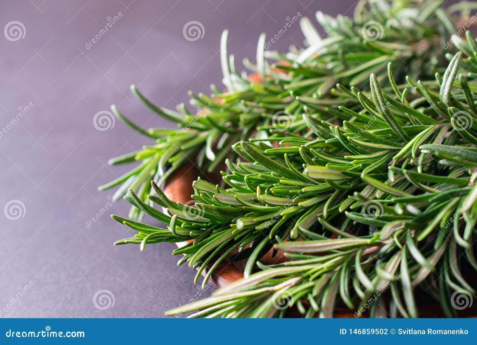 Nära övre makroskott av den nya gröna rosmarinörten