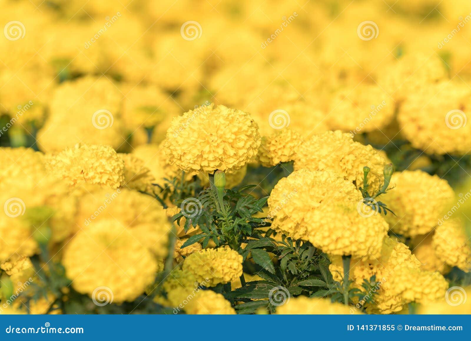Nära övre natursikt av blomman under solljus