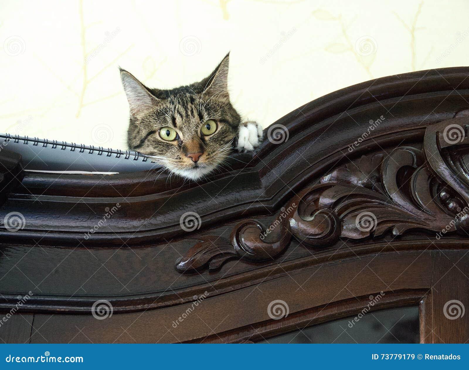 Nära övre nederlag för katt på ett skåp som ser tittaren med utrymme för annonsering, konstnärligt foto av den skämtsamma kattung