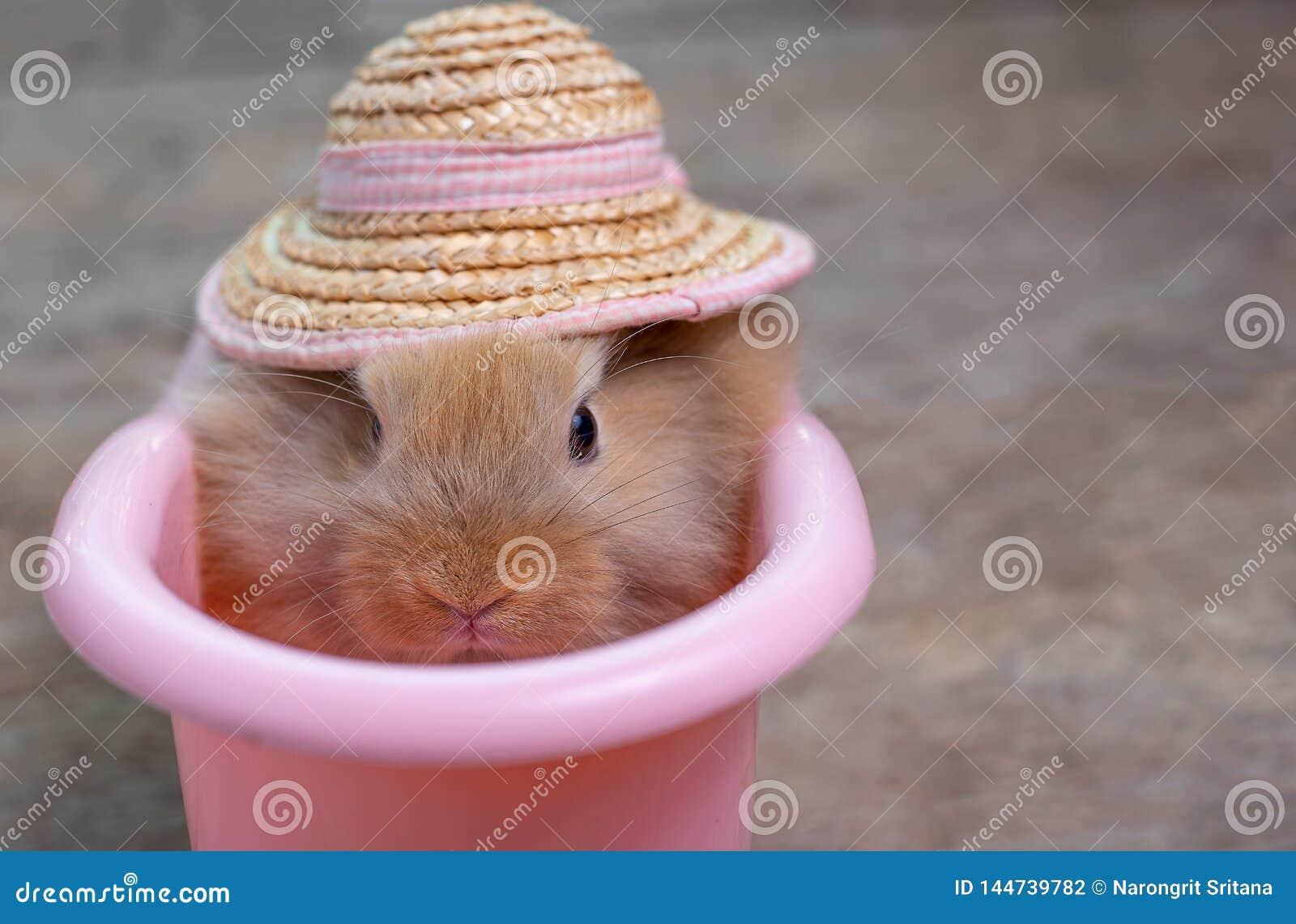 Nära övre sikt av gulligt litet ljus - brun kaninkanin med hatten i rosa badkar på trätabellen