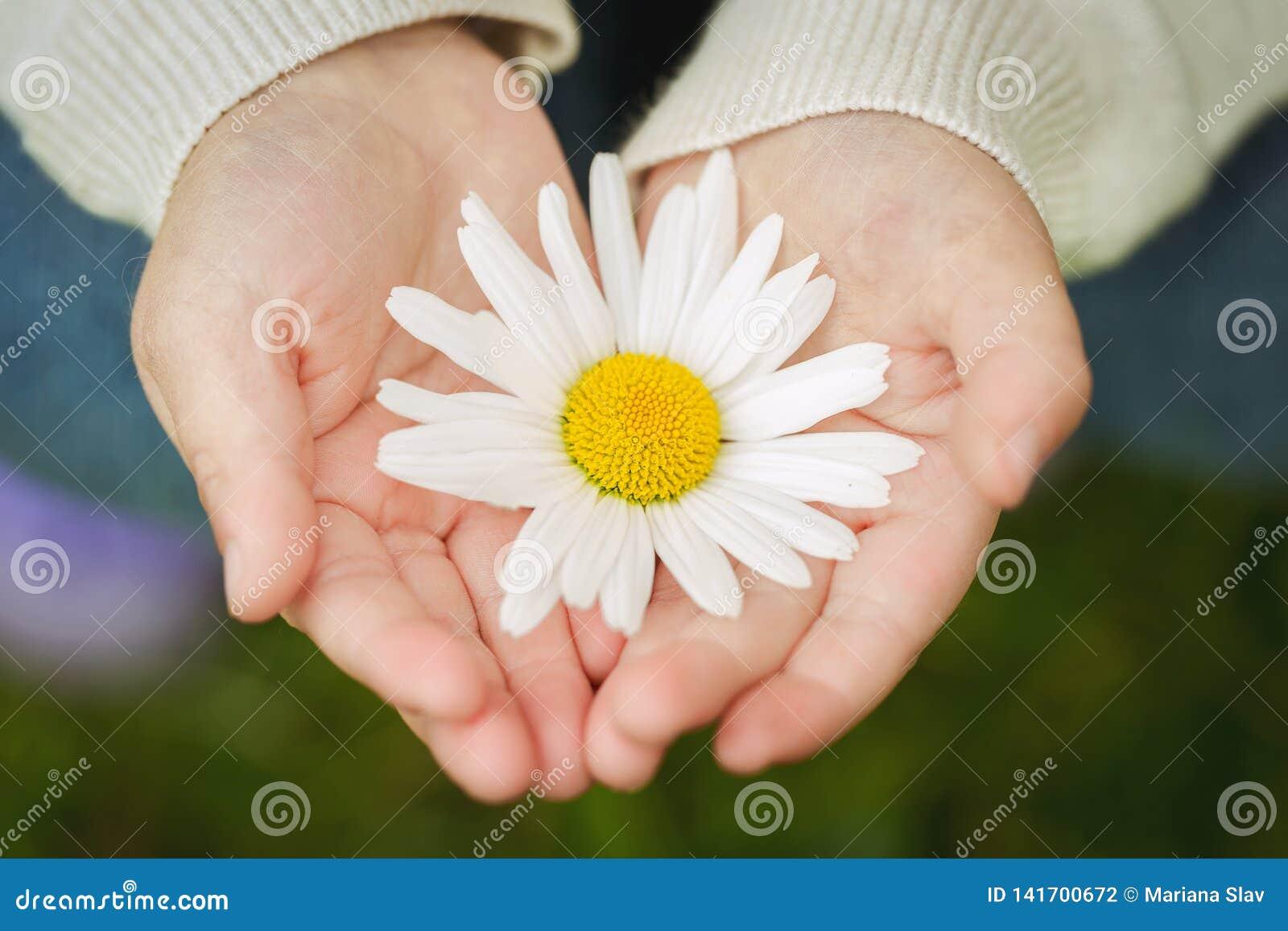 Närbild av en blomma i childshänder