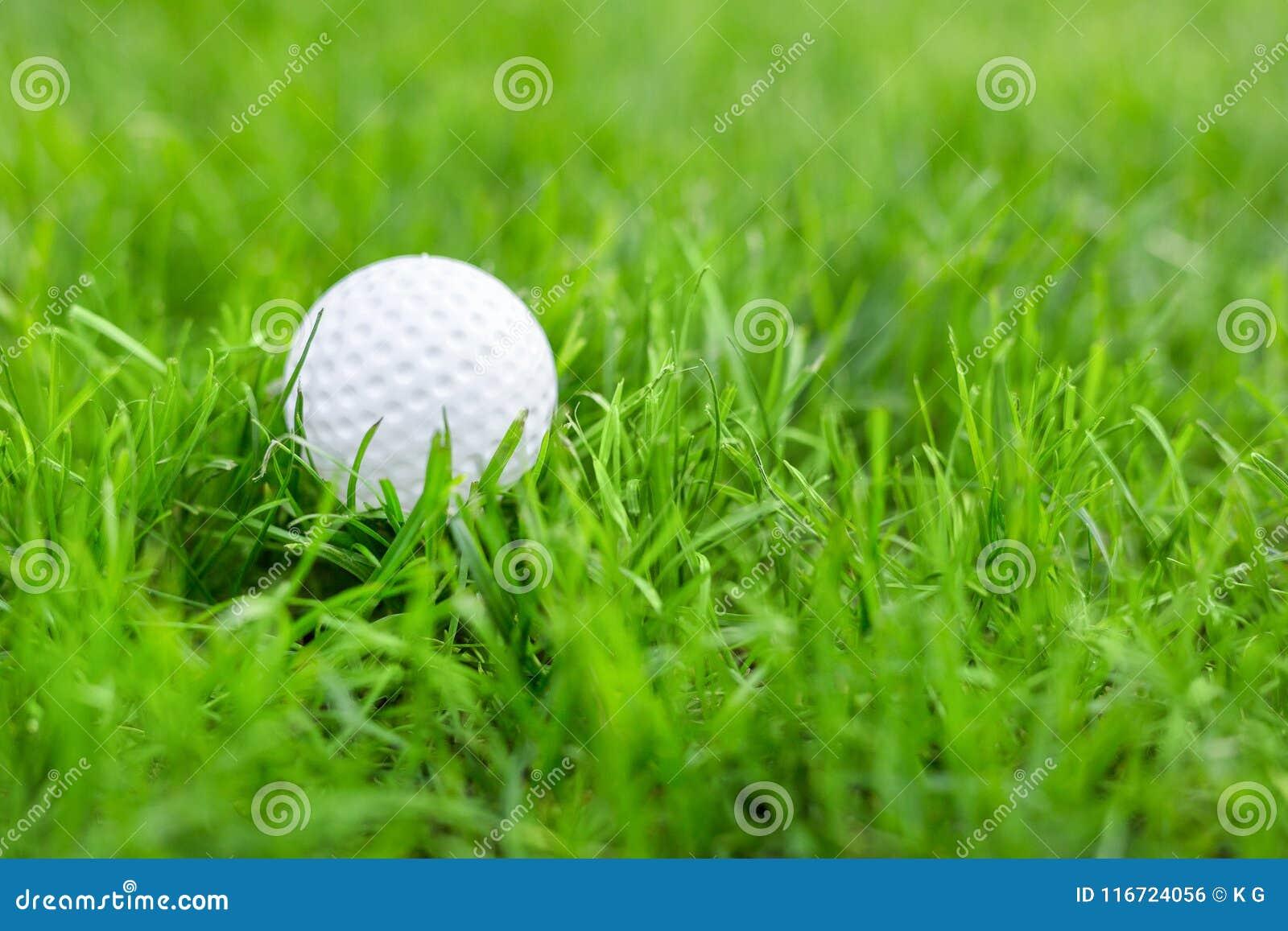 Närbild av vit golfboll i äng för grönt gräs Detaljer av lekfältet Dåligt förberedd gräsmatta för professionelllek