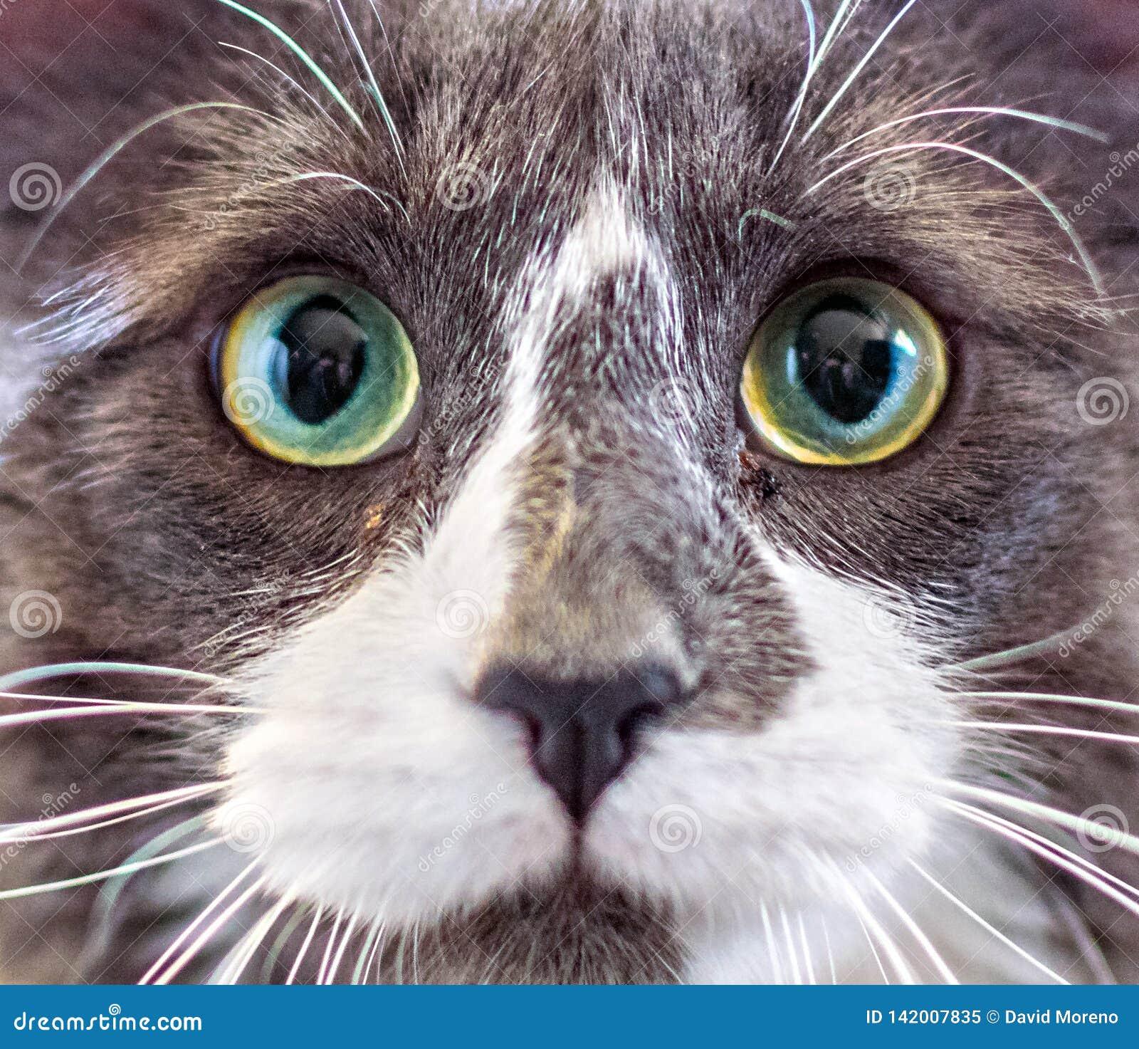 Närbildstående av en kattunge