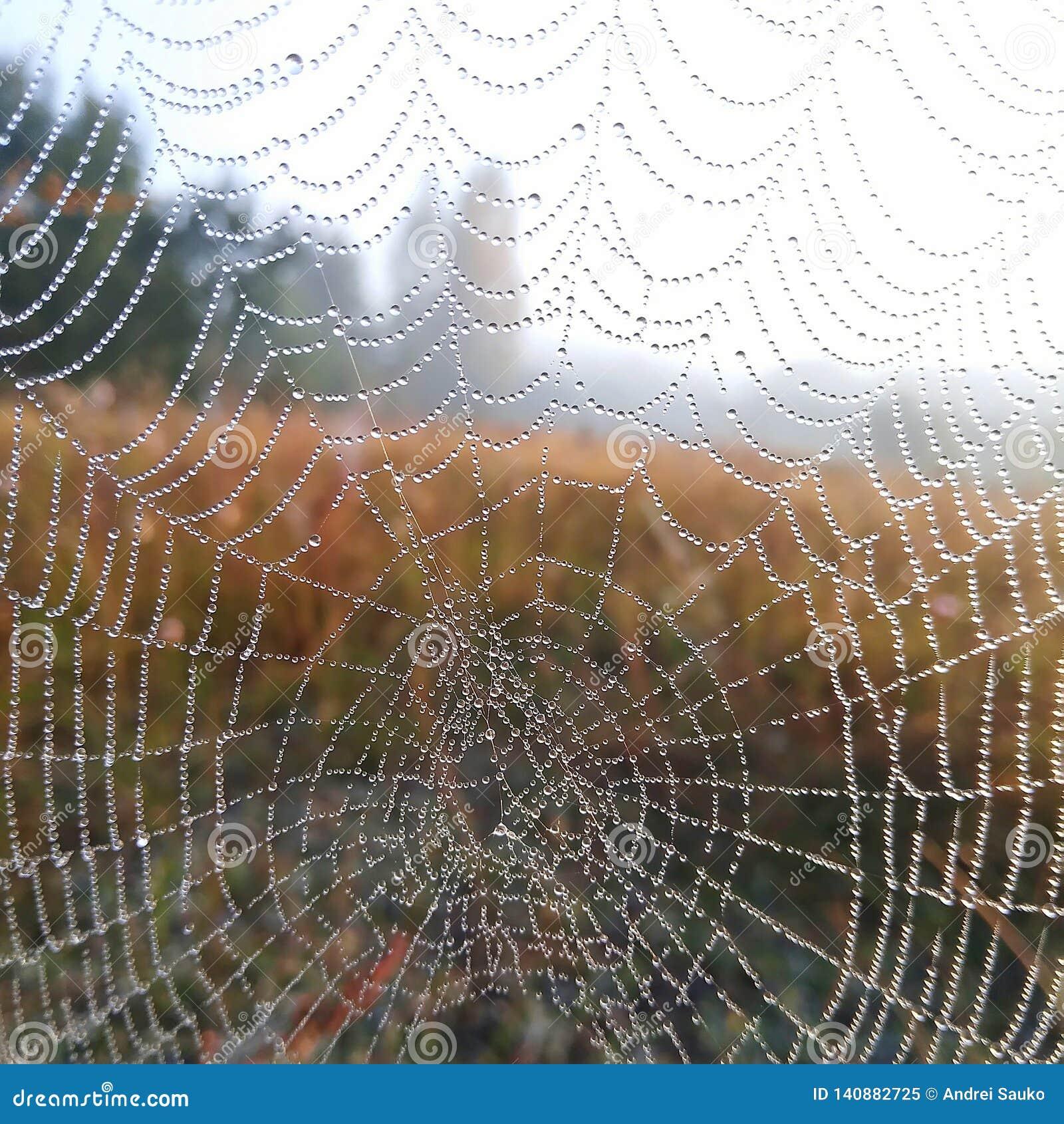 Nätverket för daggig för droppande för daggdroppe för dagg för detalj för design för garnering för fara för anslutning för konden