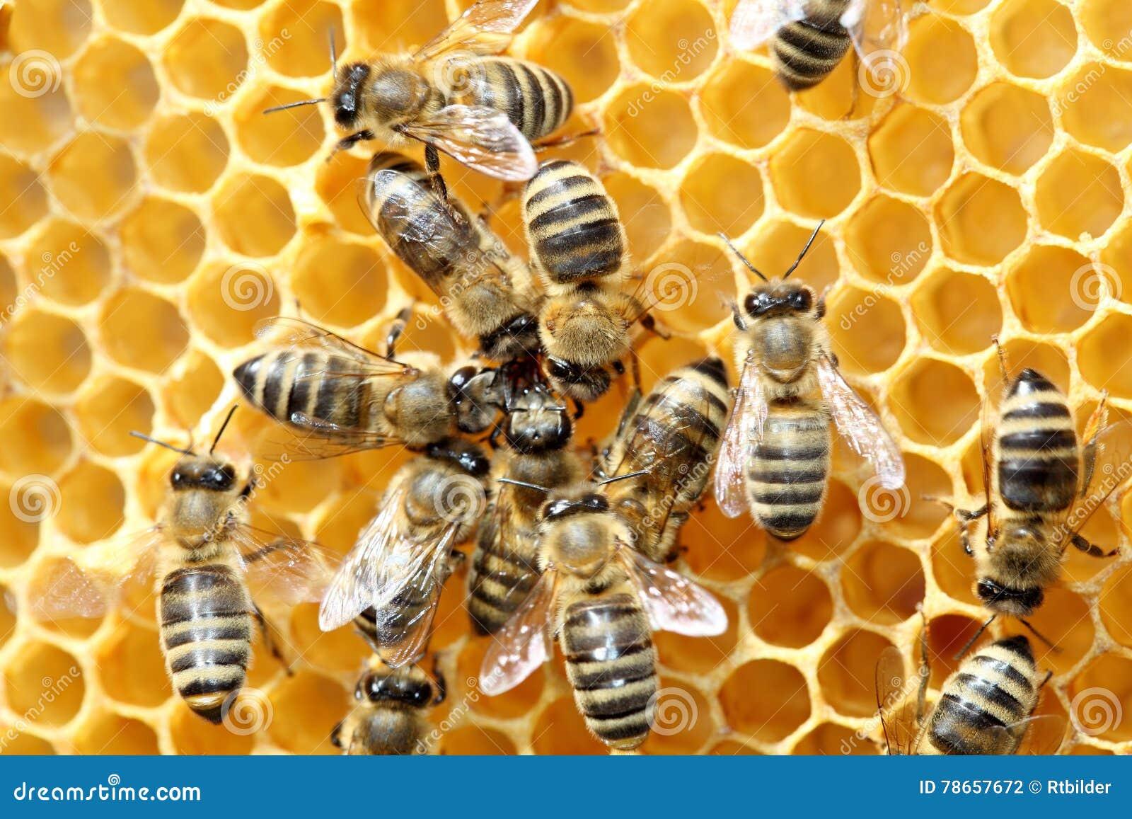 Några bin dansar