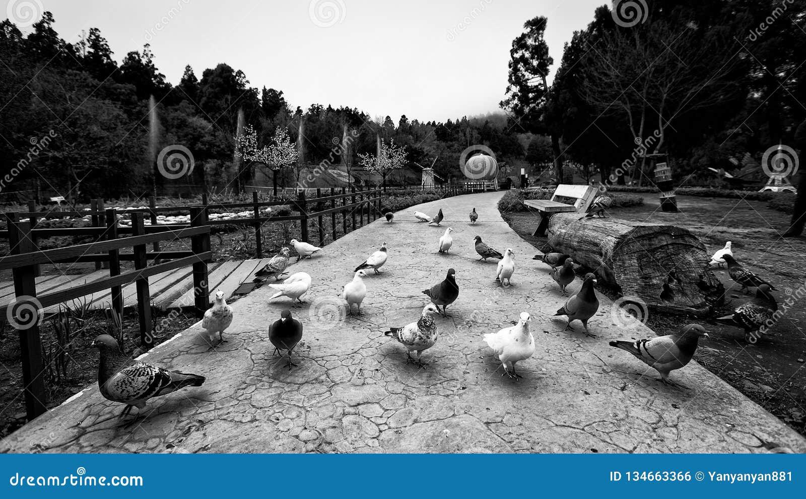 Några fåglar i lokal trädgård av Taiwan