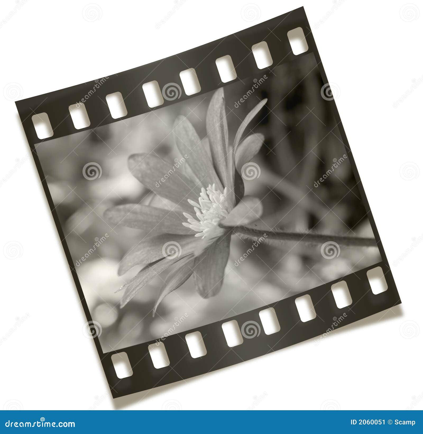 Négatif de fleur de Filmstrip