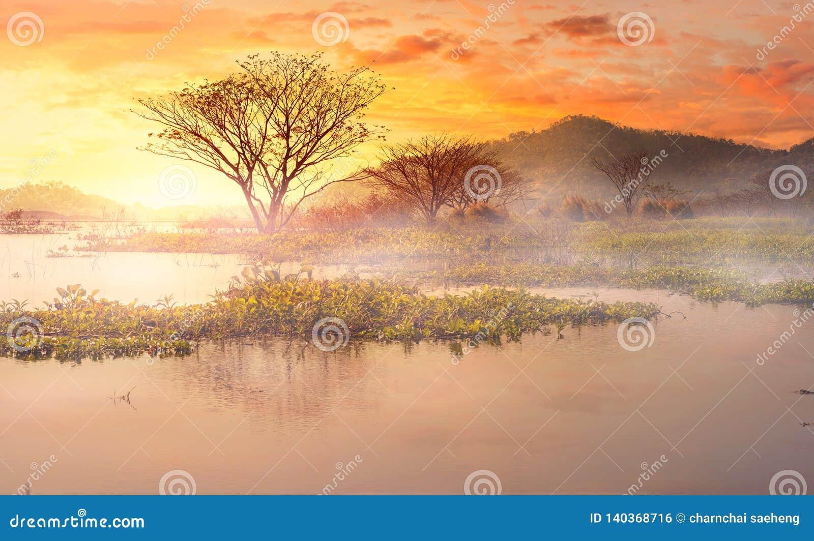 Névoa da manhã no lago a árvore na parte traseira da água e da montanha com céu bonito