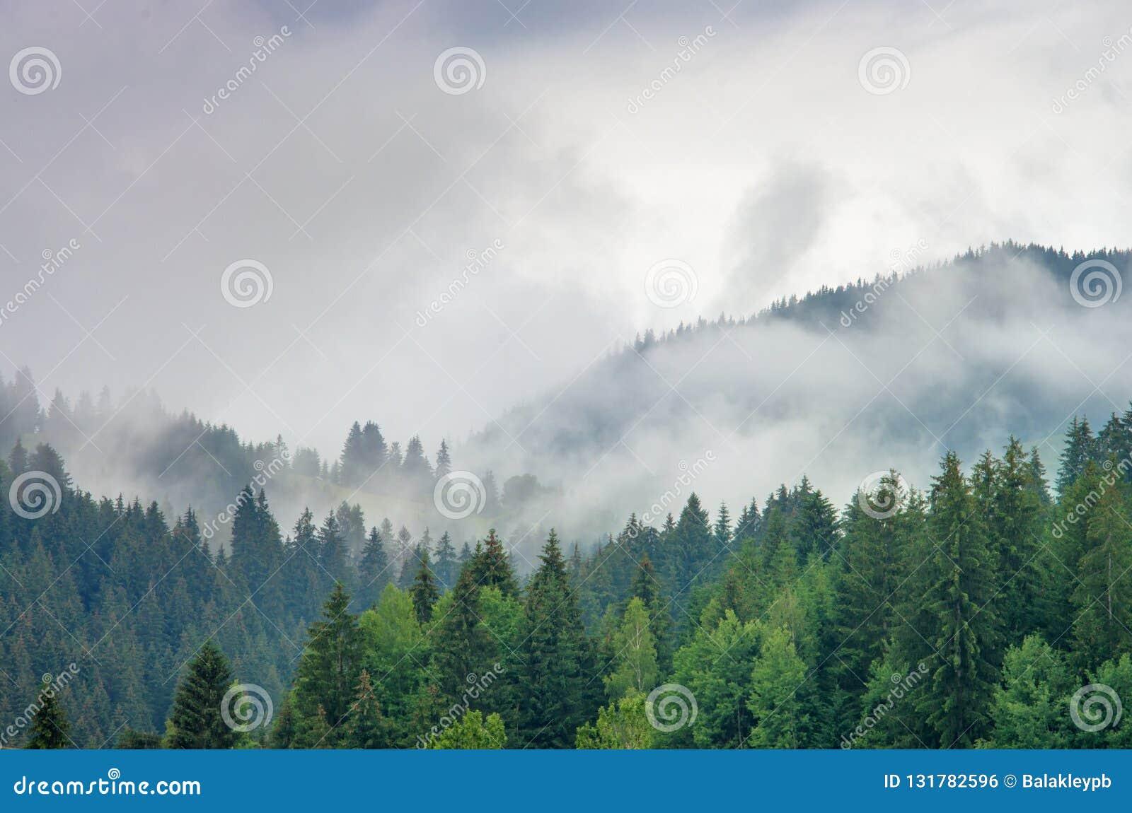 Névoa na floresta dos pinheiros nas montanhas