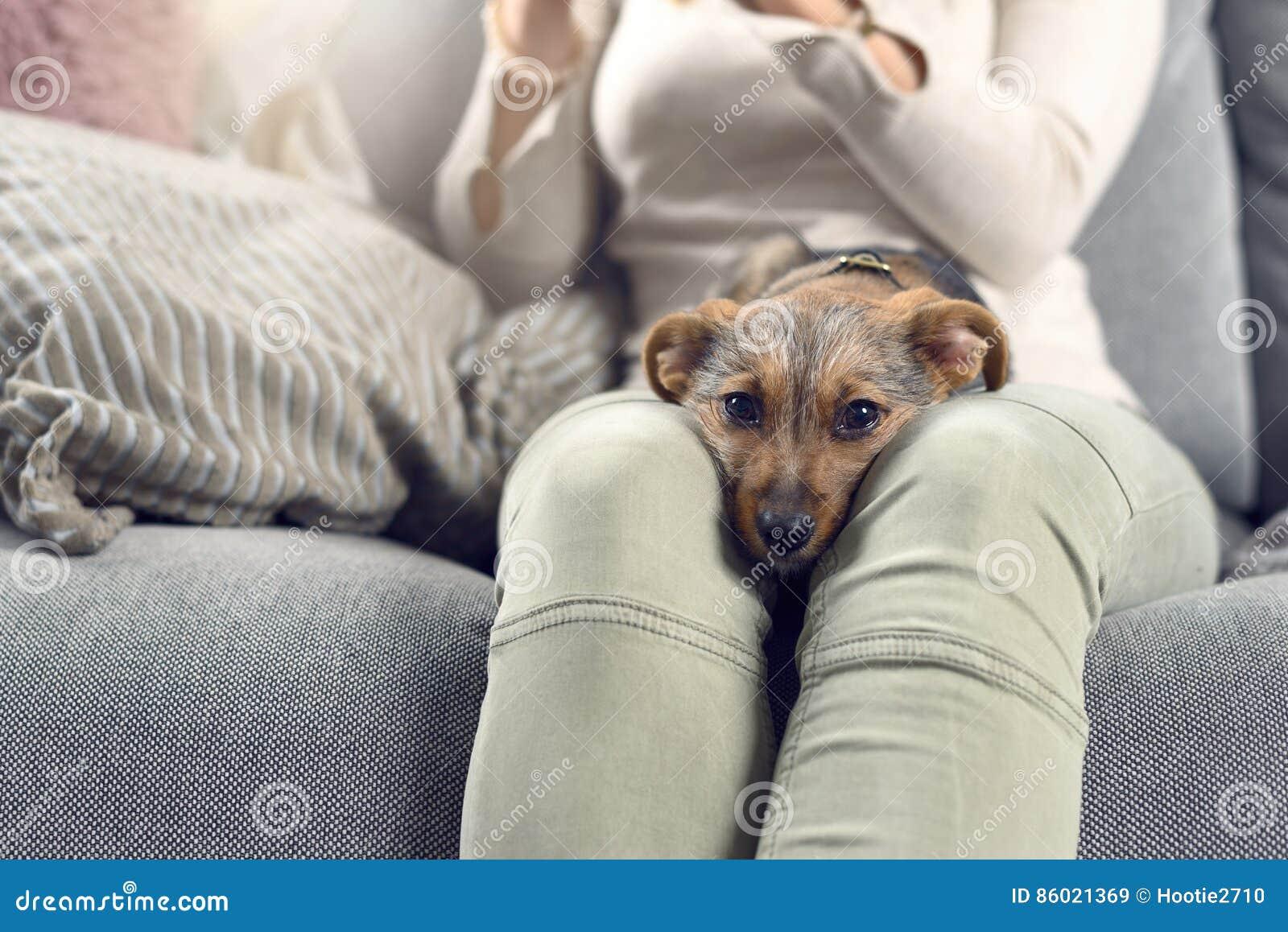 Nöjd liten hund som sover på dess ägarevarv