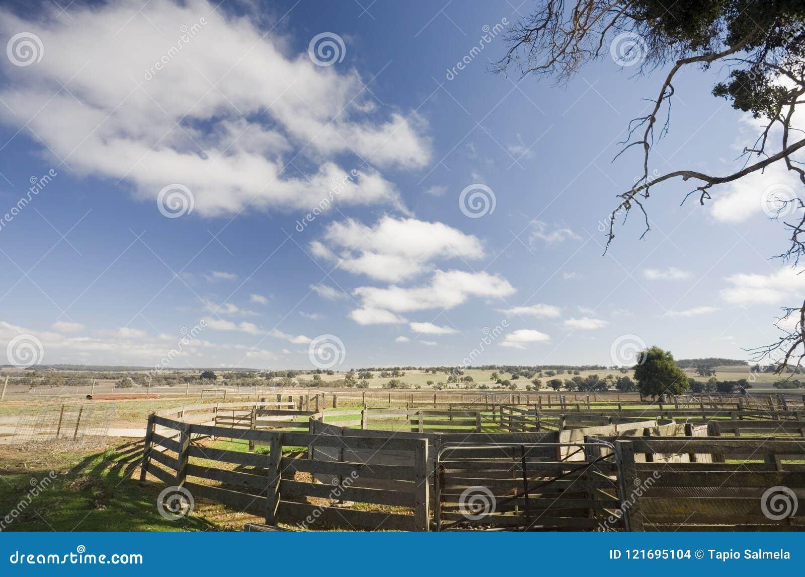 Nötkreaturgårdar av Australien
