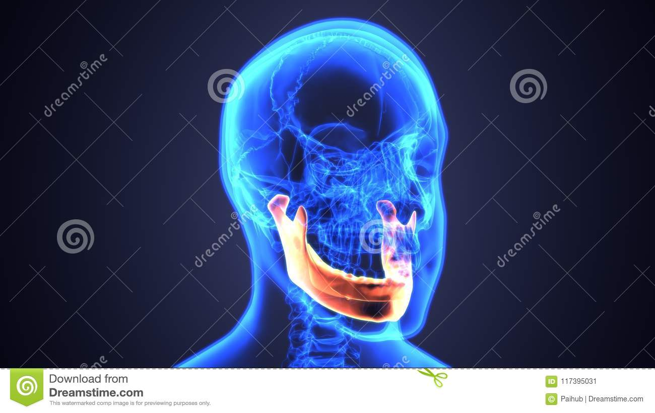 3d Illustration Of Male Zygomatic Bone Skull Anatomy Blue Concept