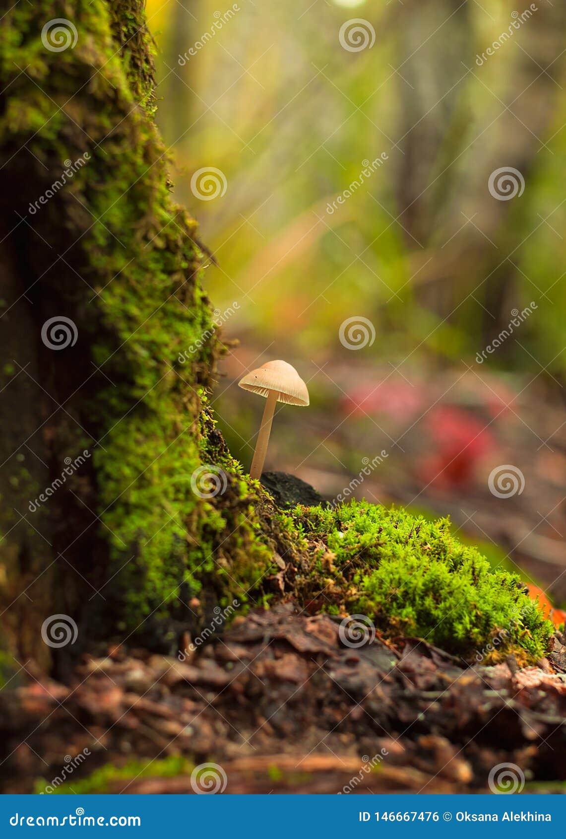 ??n paddestoel groeit in het bosclose-up