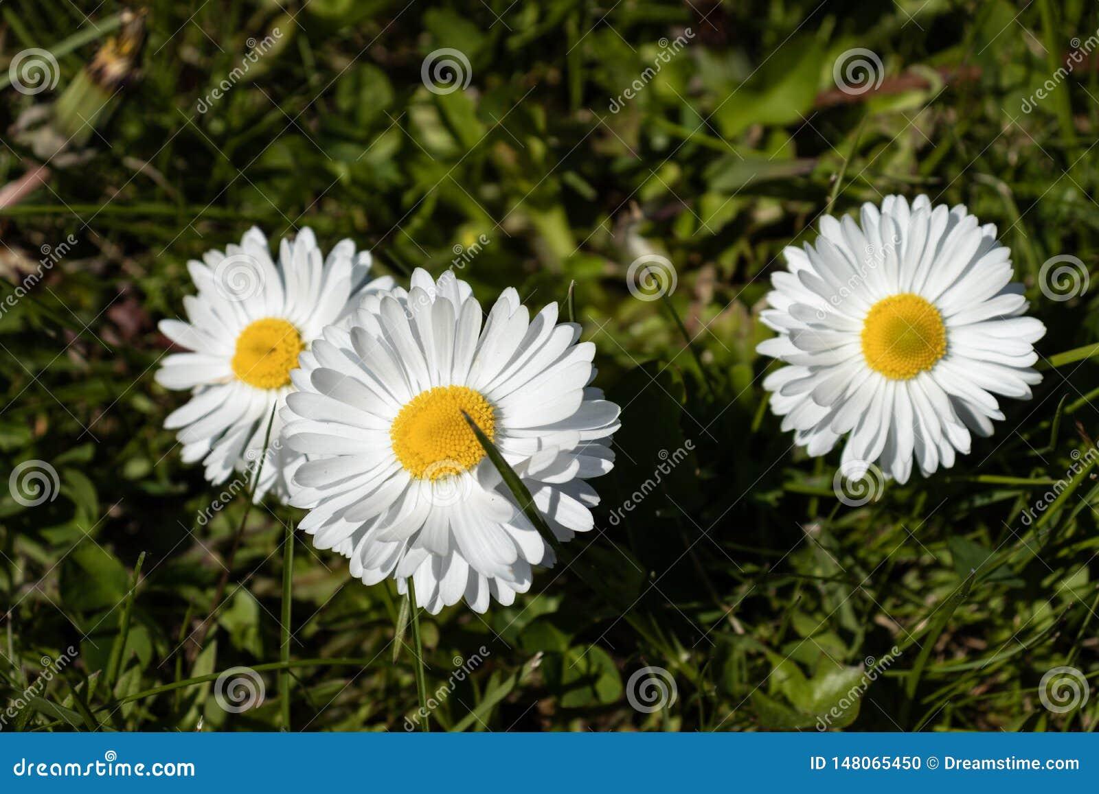 N?tta blommor p? gr?n bakgrund