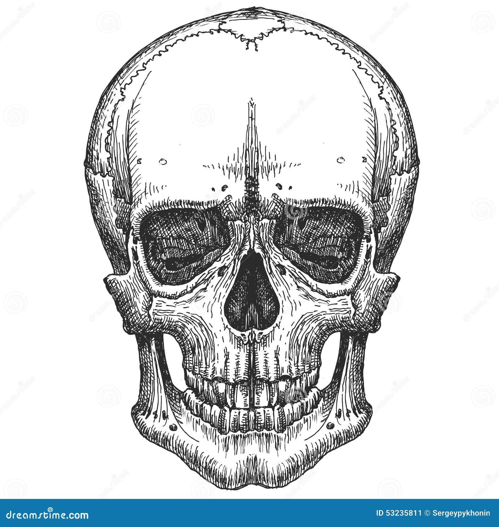Na biały tle ludzka czaszka nakreślenie