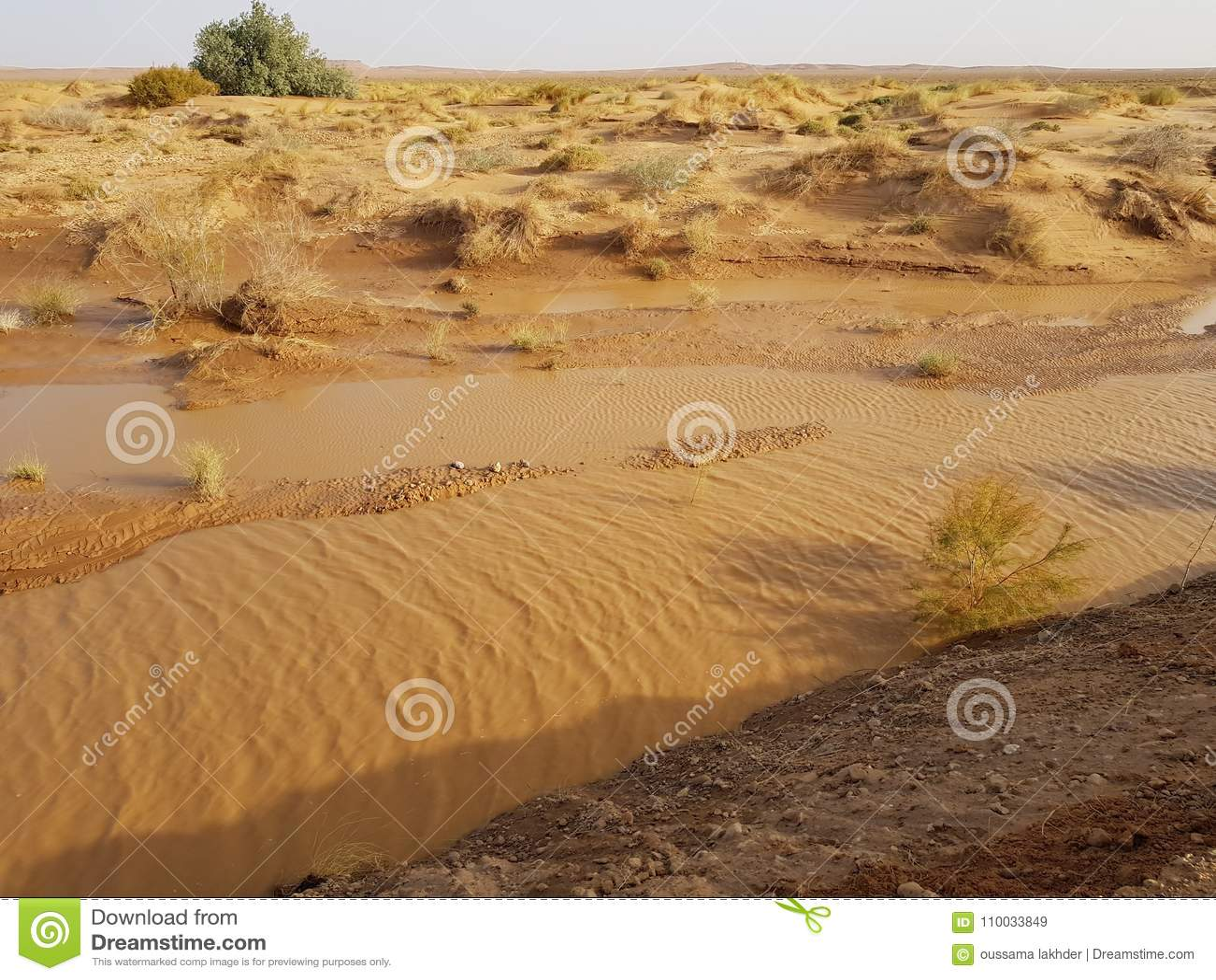 Na een zware regen in de woestijn