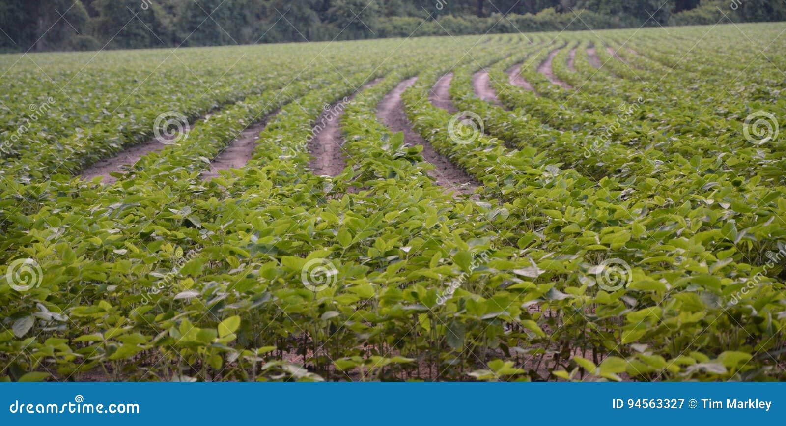 Na gospodarstwie rolnym