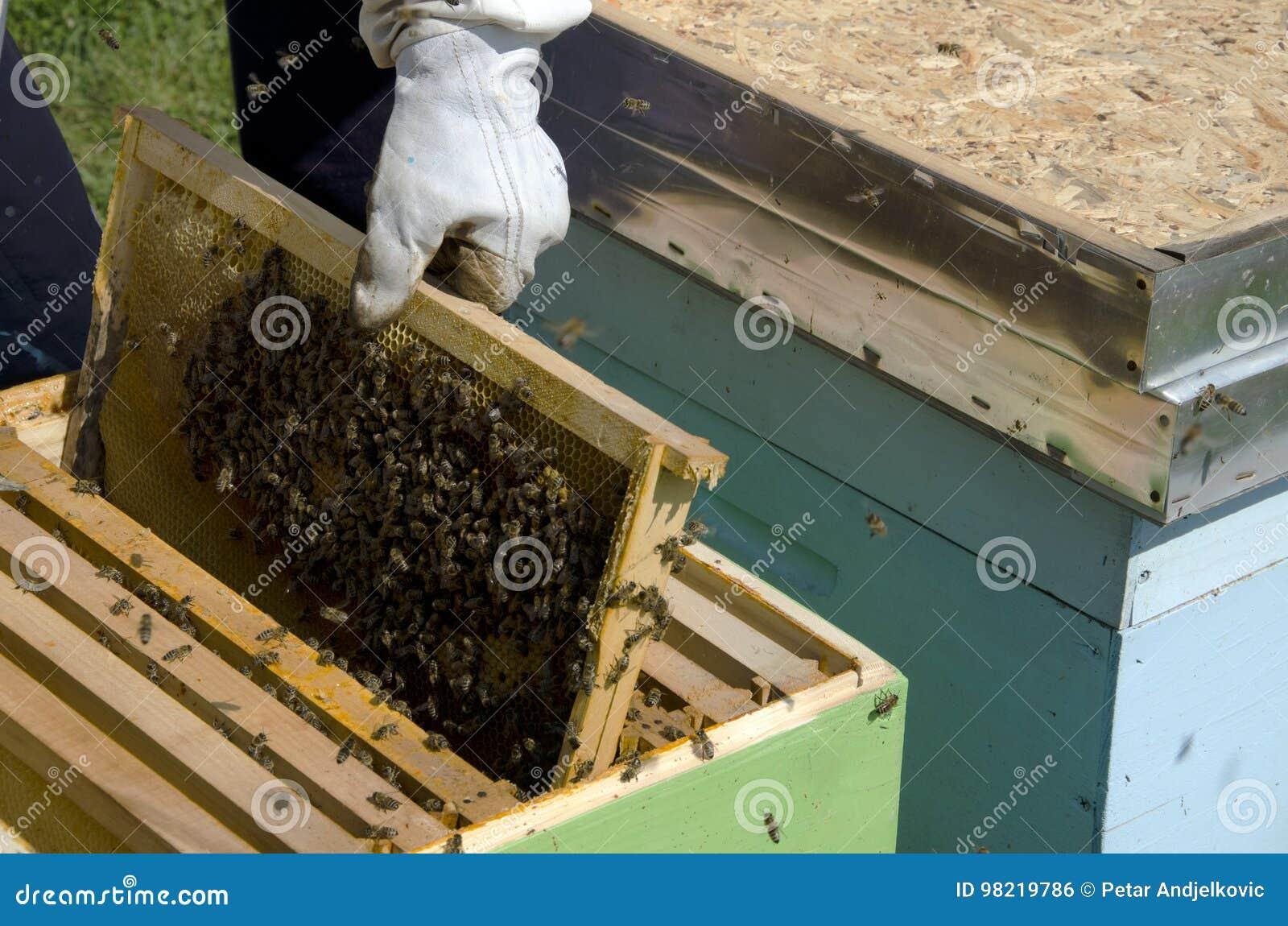 Na Honeycomb miodowa Pszczoła