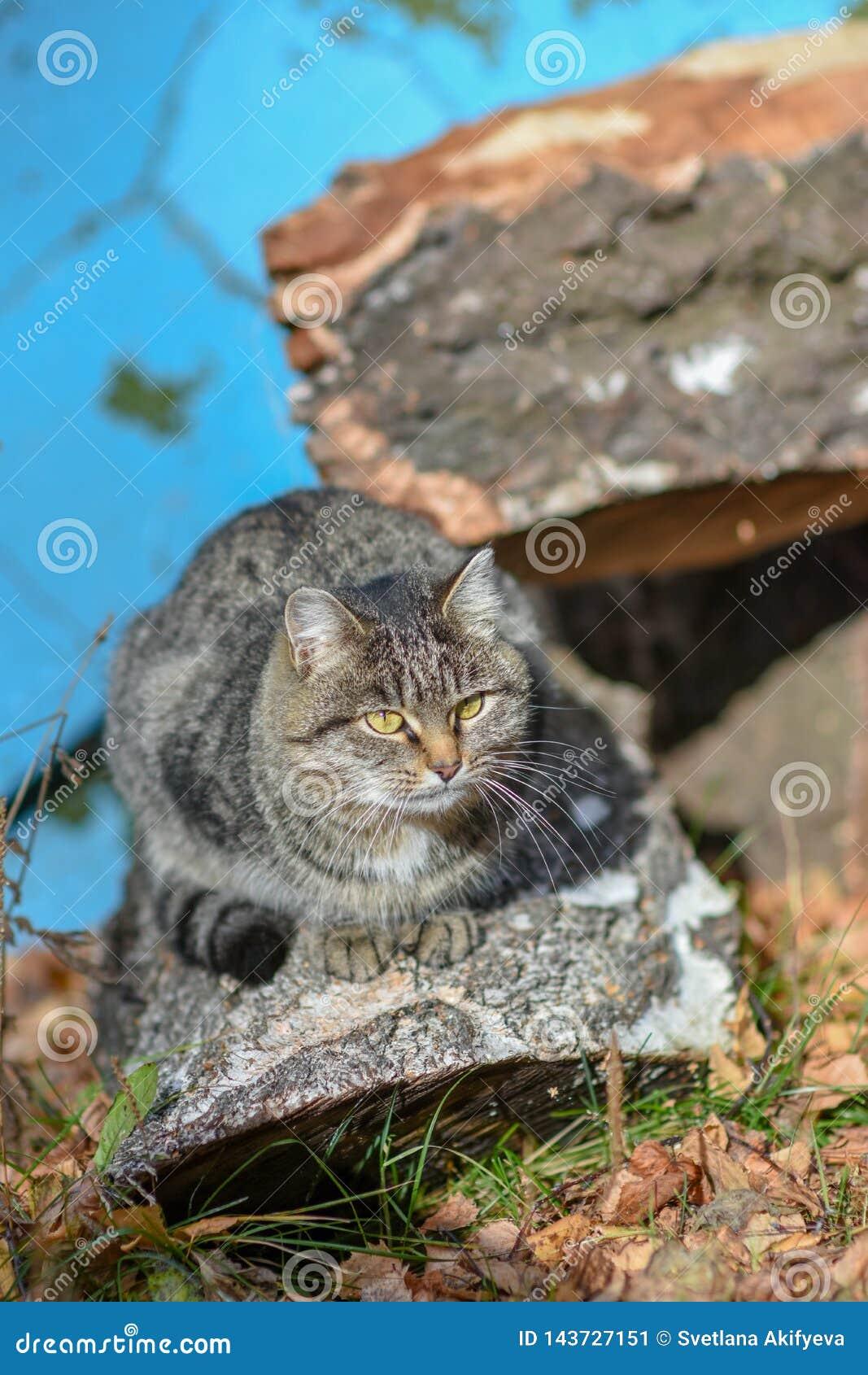 Na terra o gato tem o alimento e está olhando para a frente a