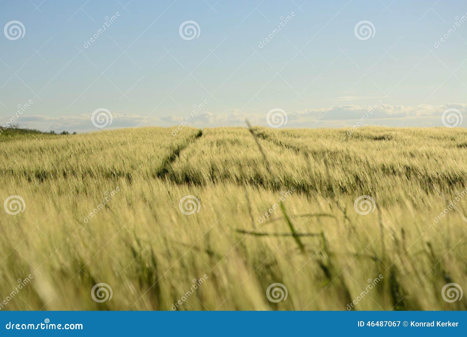 Na zewnątrz miasta pole - wiejski krajobraz -