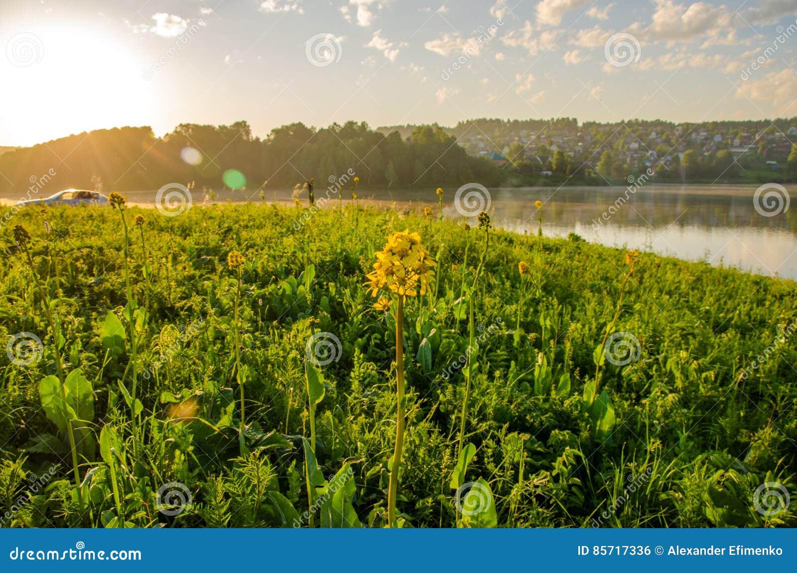 Na zielonym gazonie w wczesnym mgłowym ranku