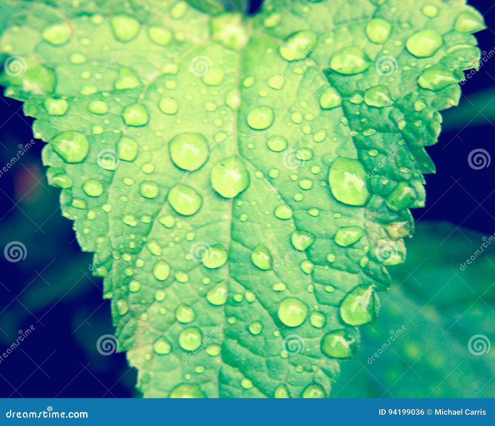 Na zielonym liść wodne krople