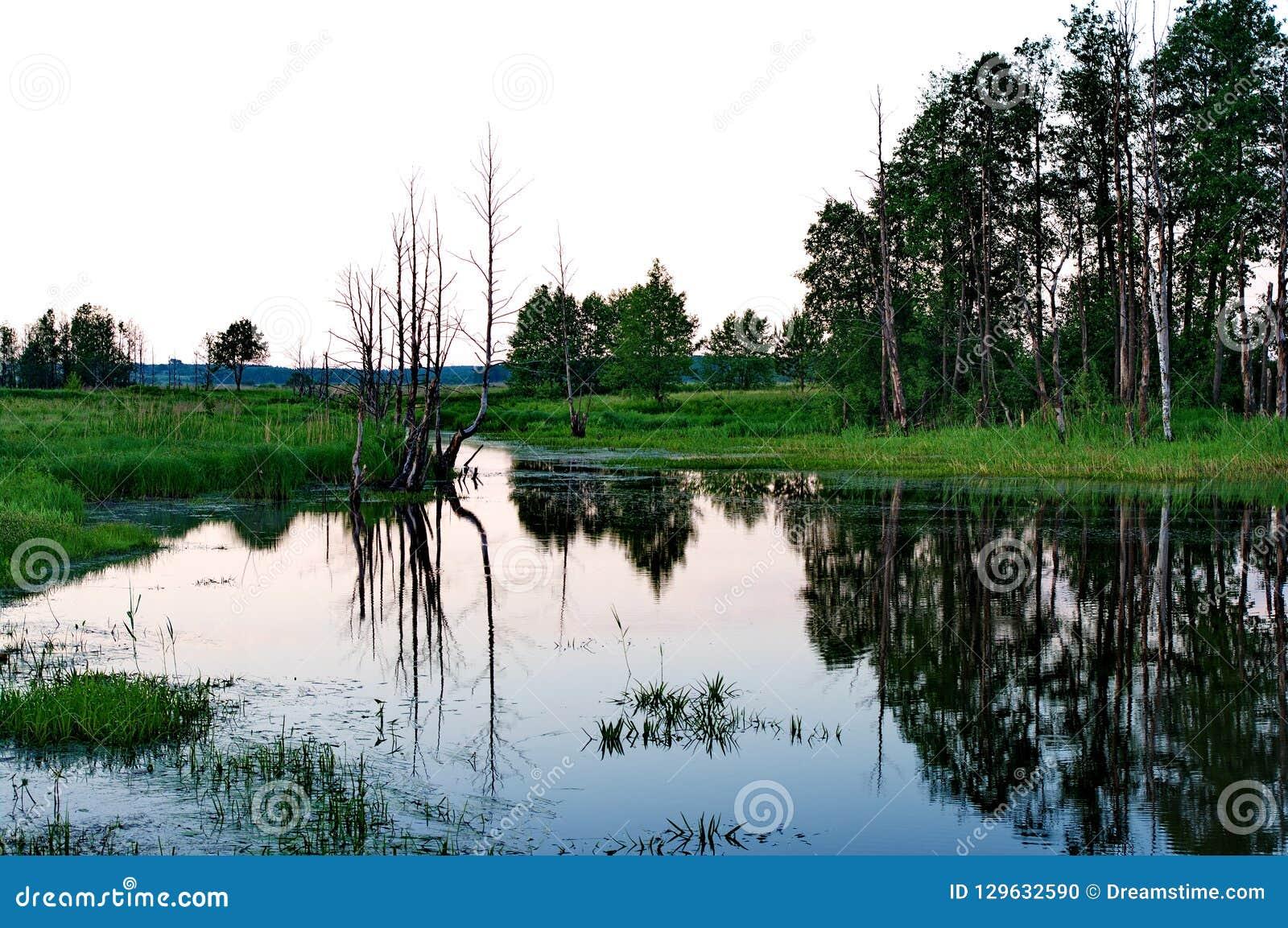 Na zona sujeita a inundações do rio de Klyazma