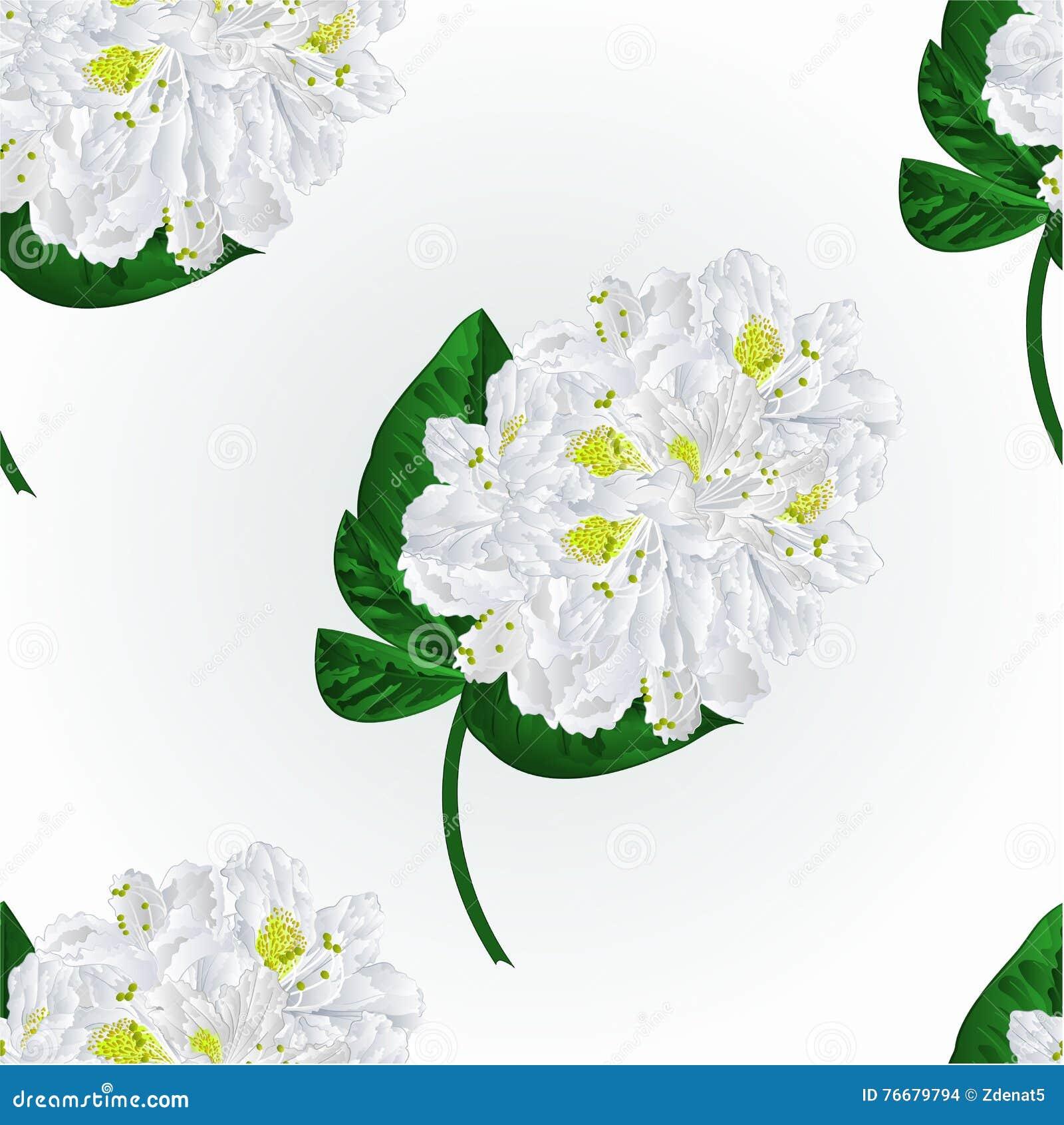 Naadloze het takjevector van de textuur witte rododendron