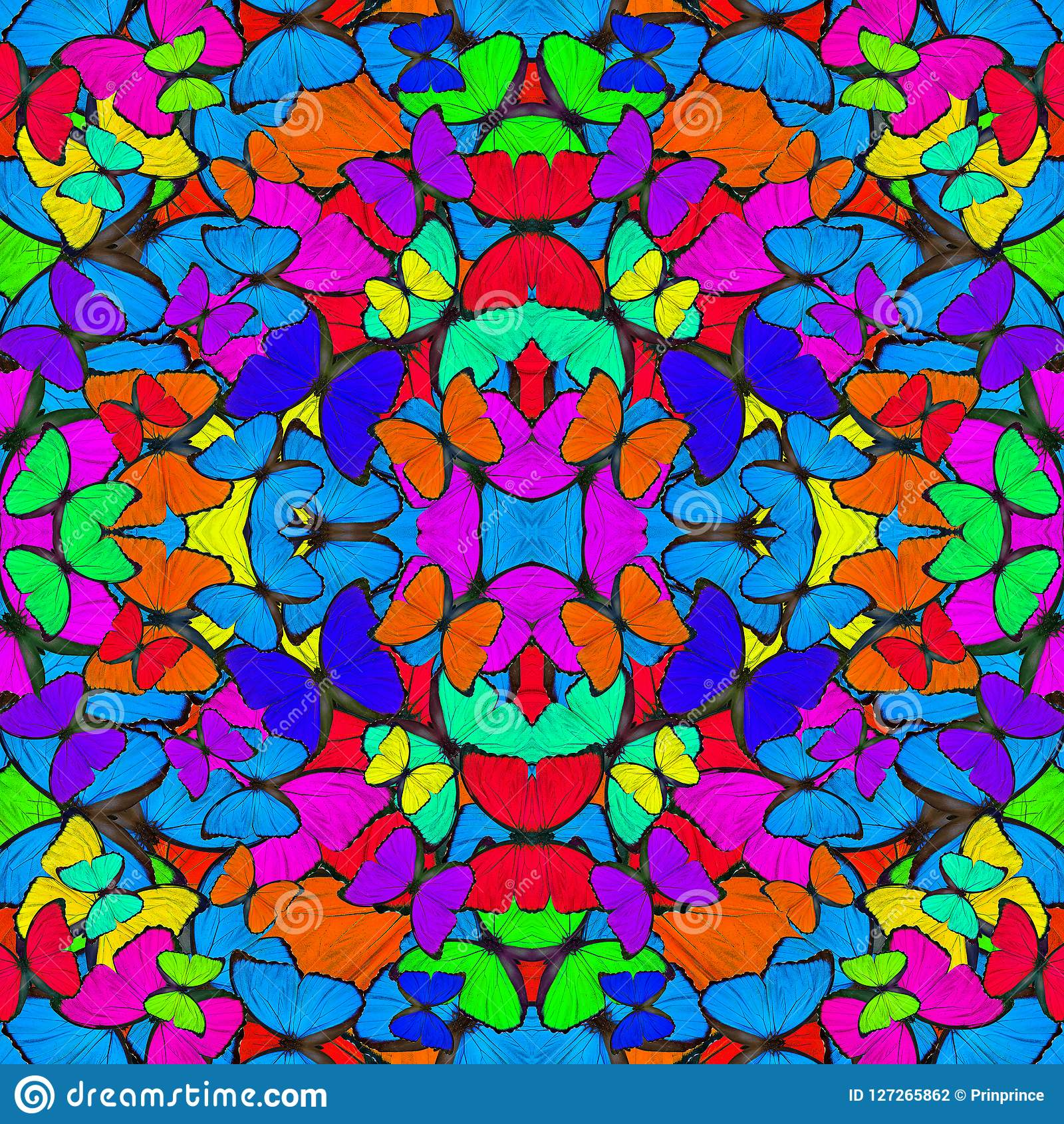 Naadloze kleurrijke achtergrond die van de compilatie van Blauwe Morpho-vlinders met fluweel en heldere buitensporige textuur wor
