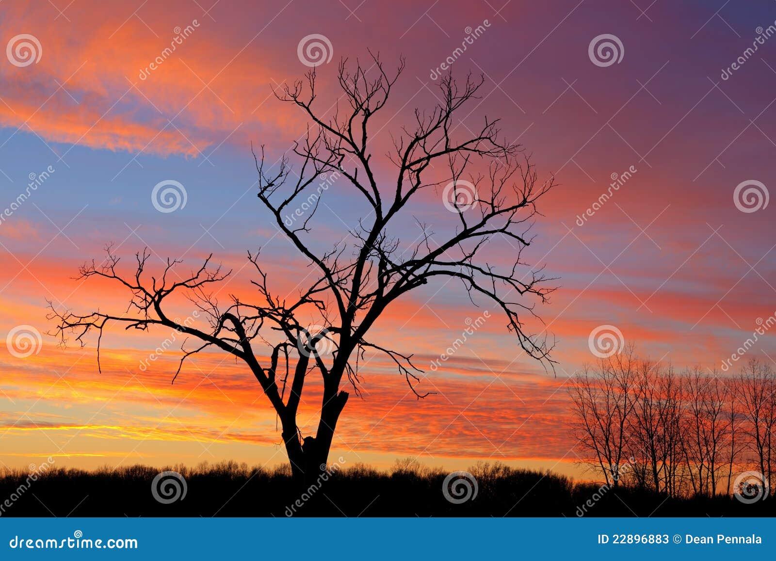 Naakte Bomen in Dawn