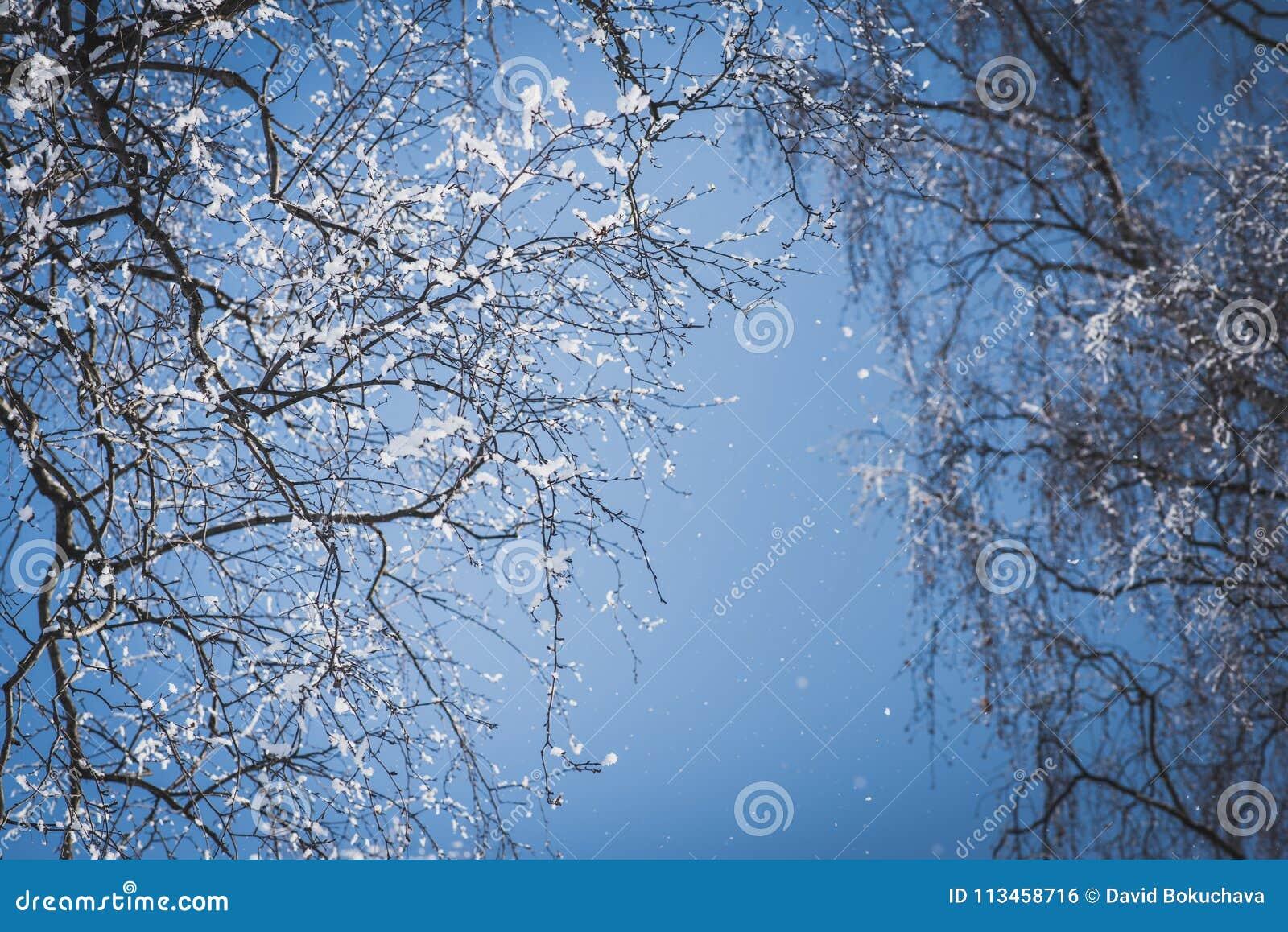 Naakte die boomtakken met sneeuw tegen blauwe hemel worden behandeld