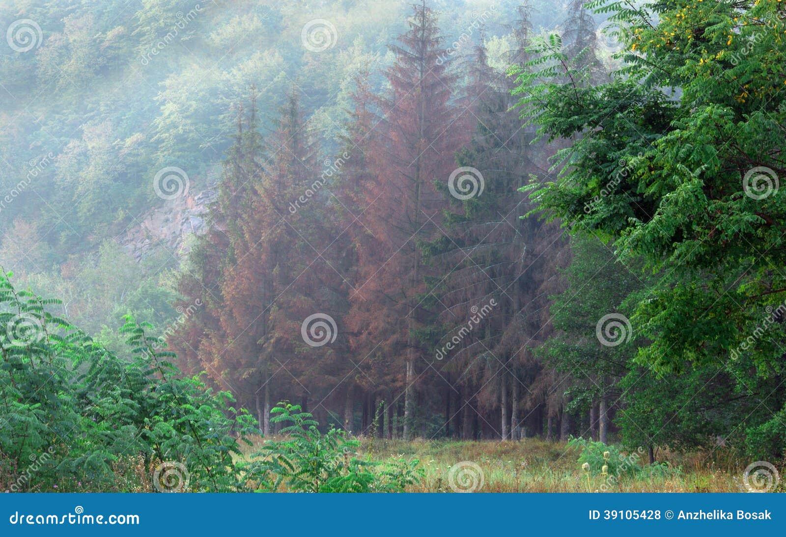 Naald boslandschap