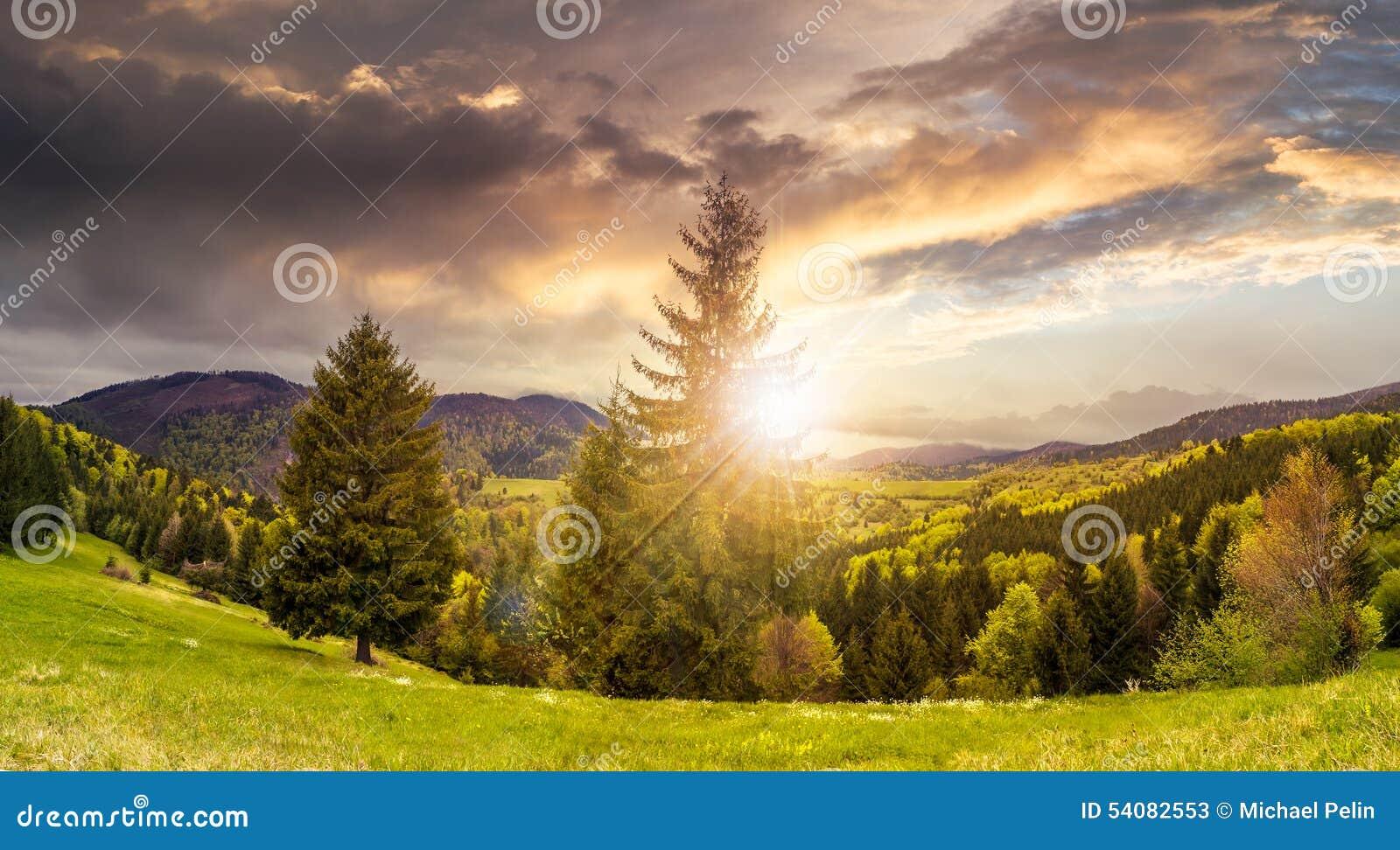 Naaldbos in berg bij zonsondergang