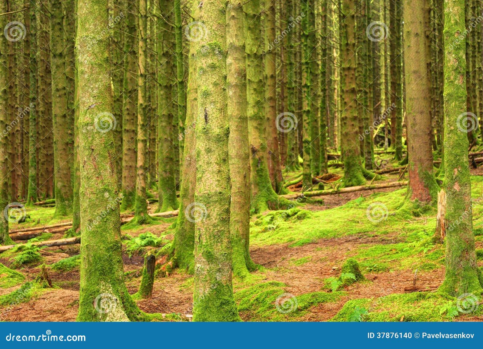 Naaldbos, het Verenigd Koninkrijk, Engeland