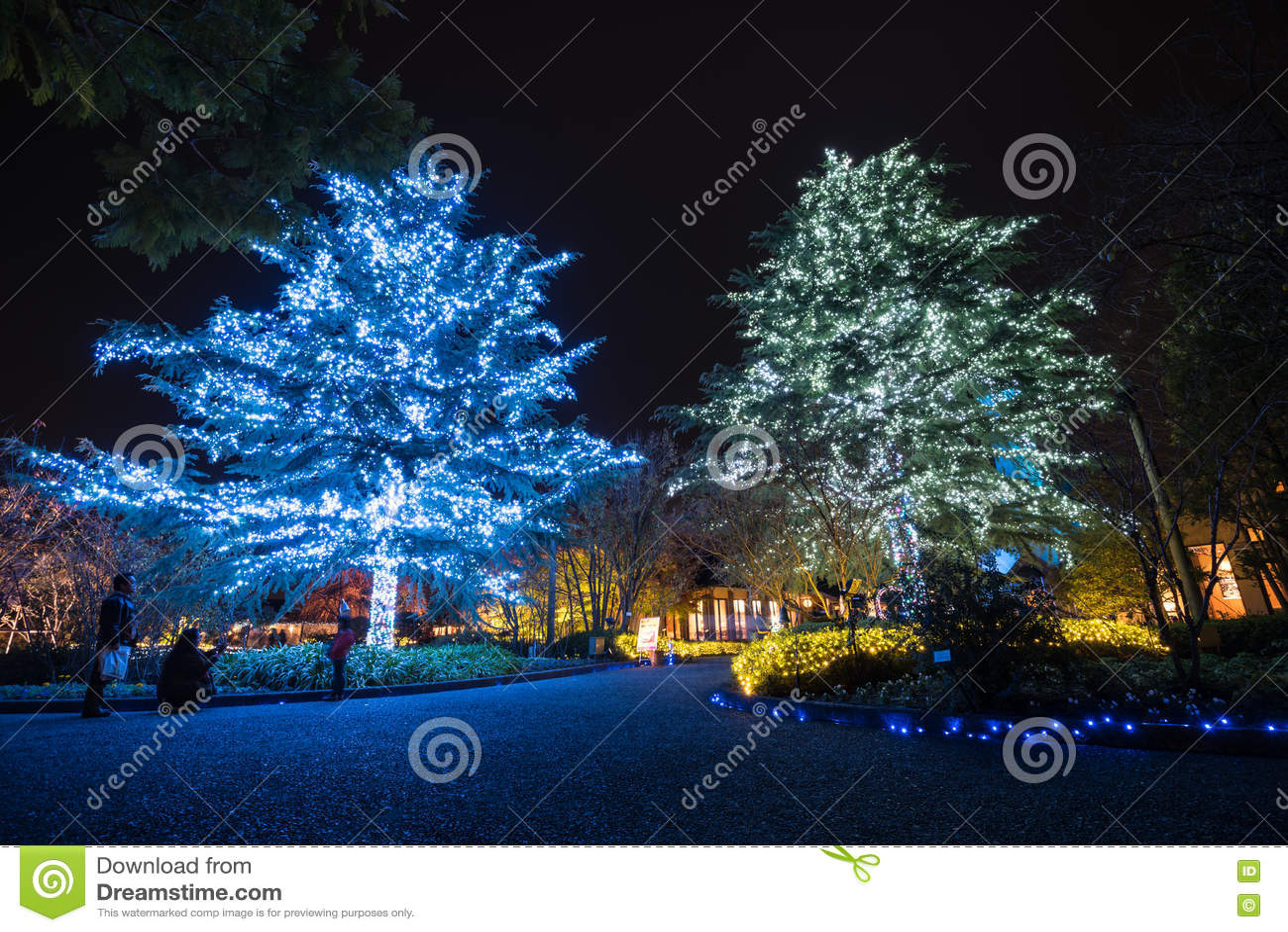 Nabana żadny Sato zimy iluminacja