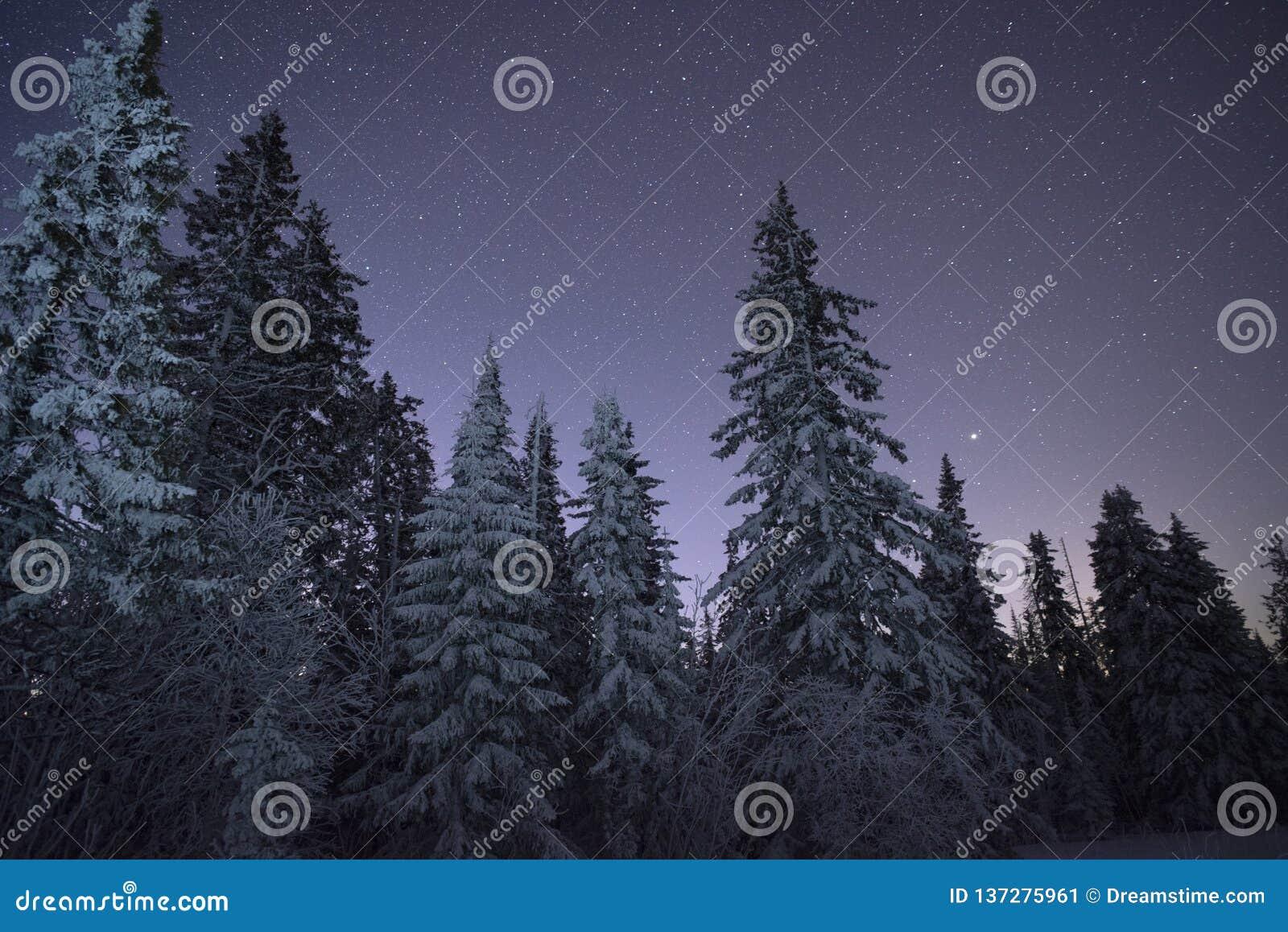 Nabiał Star Trek w zim drewnach