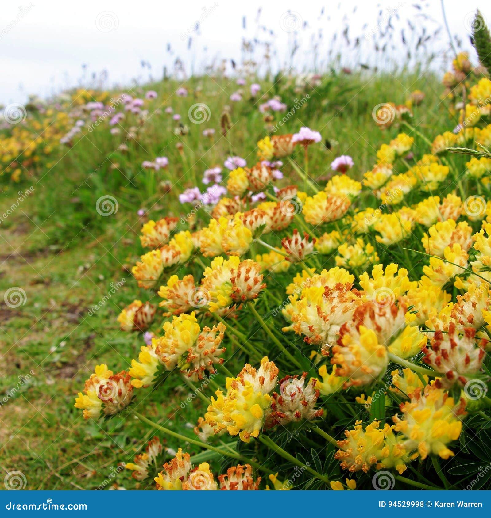 Nabrzeżne flory