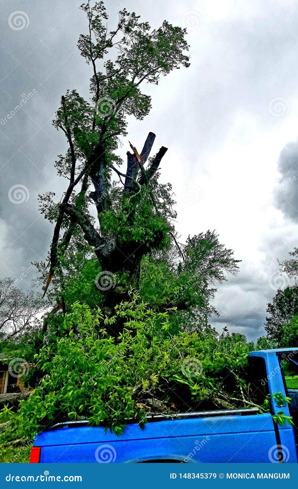 Nach Sturm? Kleinlaster-großer Baum