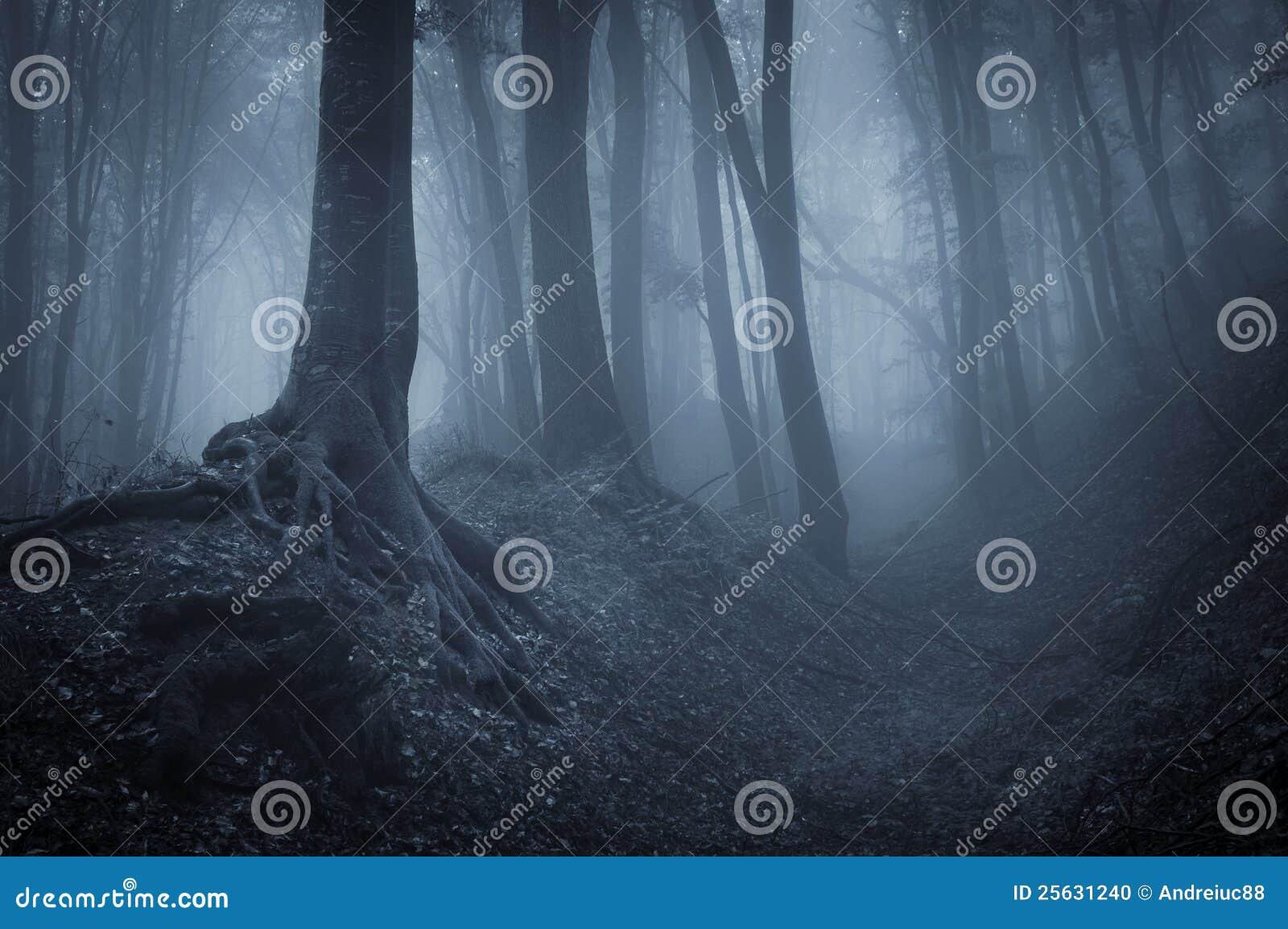 Nacht in een geheimzinnig bos