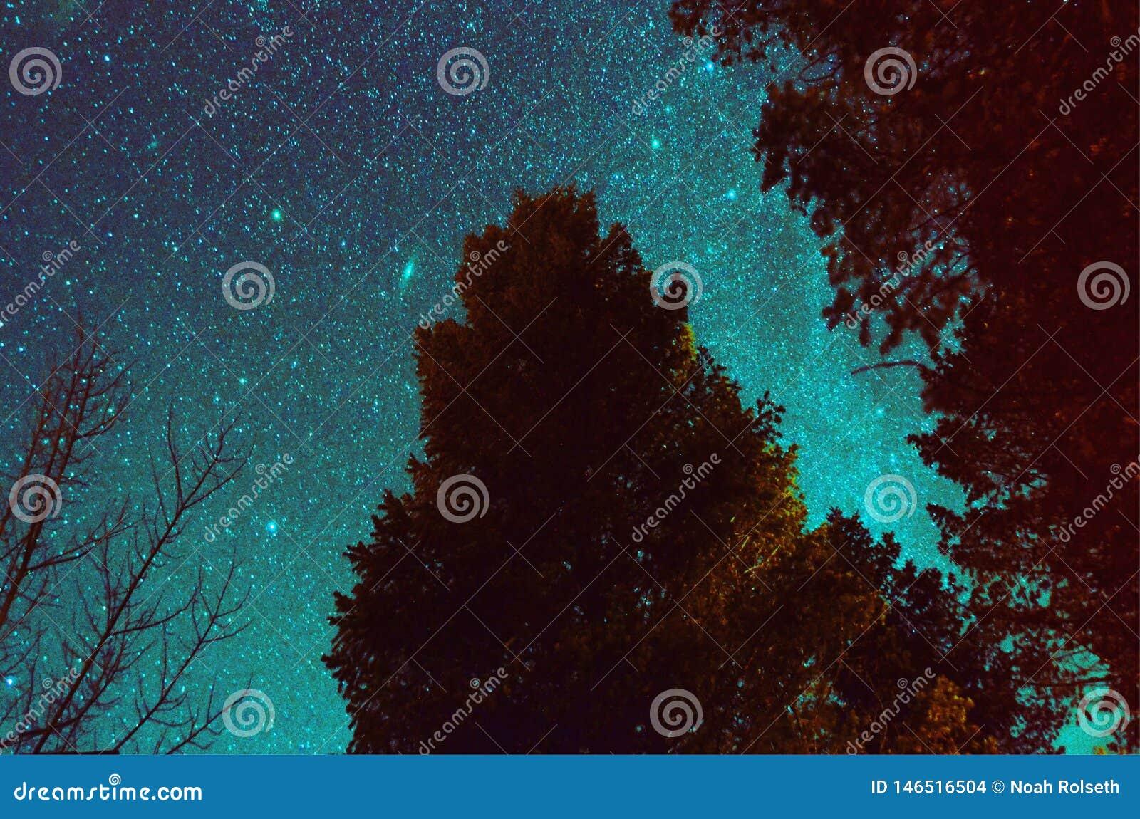 Nachtzeitbaum mit Milchstra?e