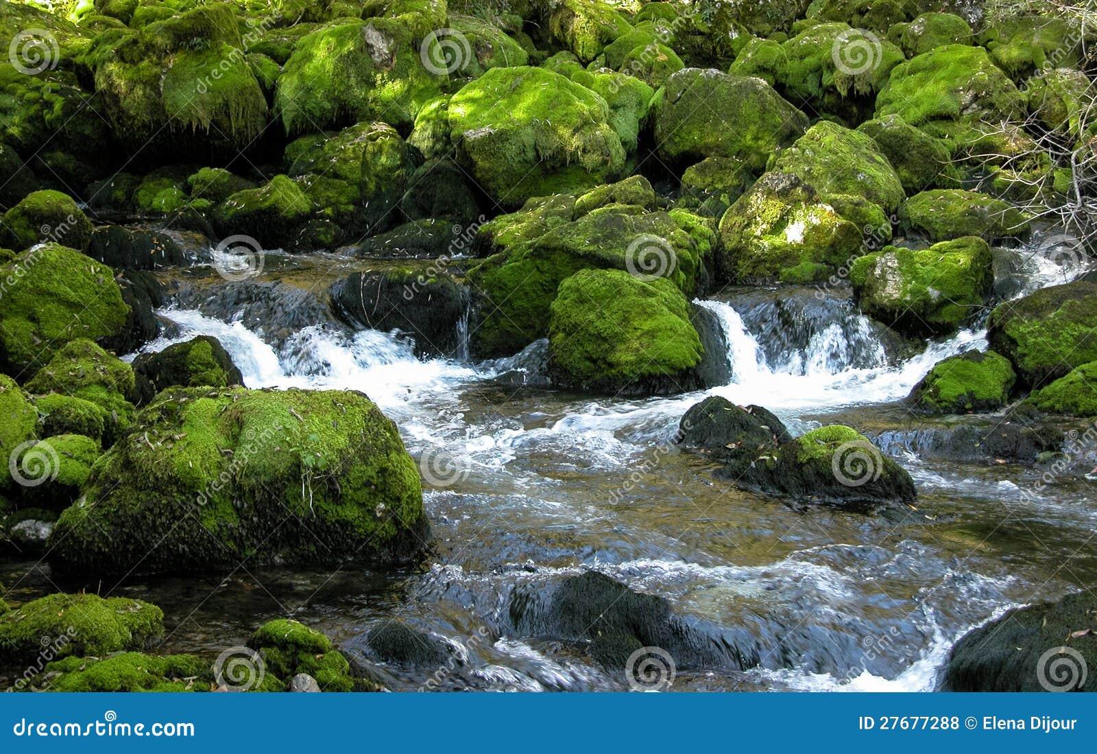 Nad zielonymi mechatymi skałami lasowy strumień.